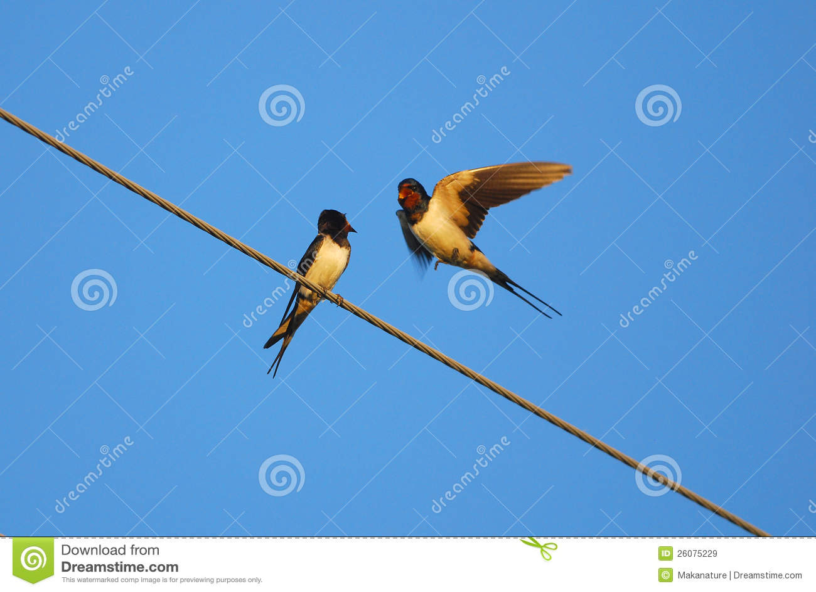 2 swallows