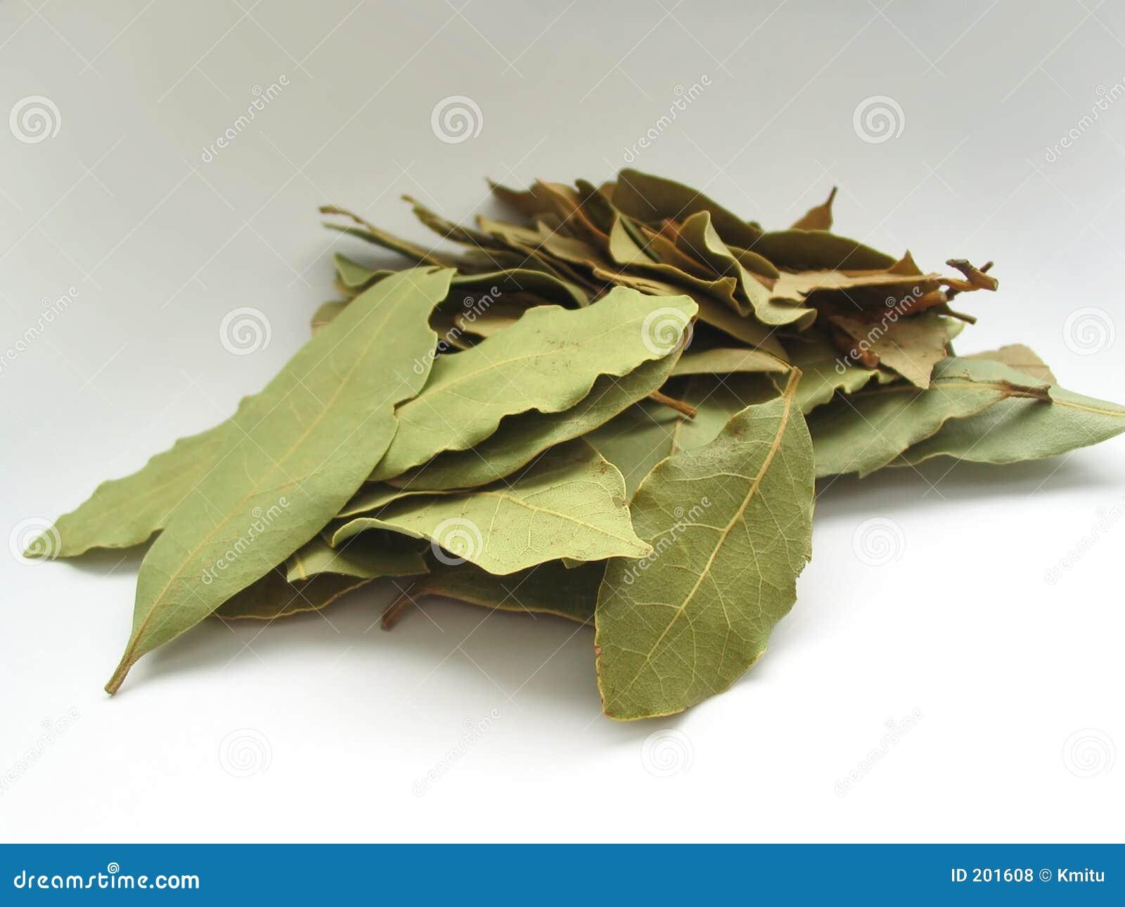 2 täta leaves för fjärd upp