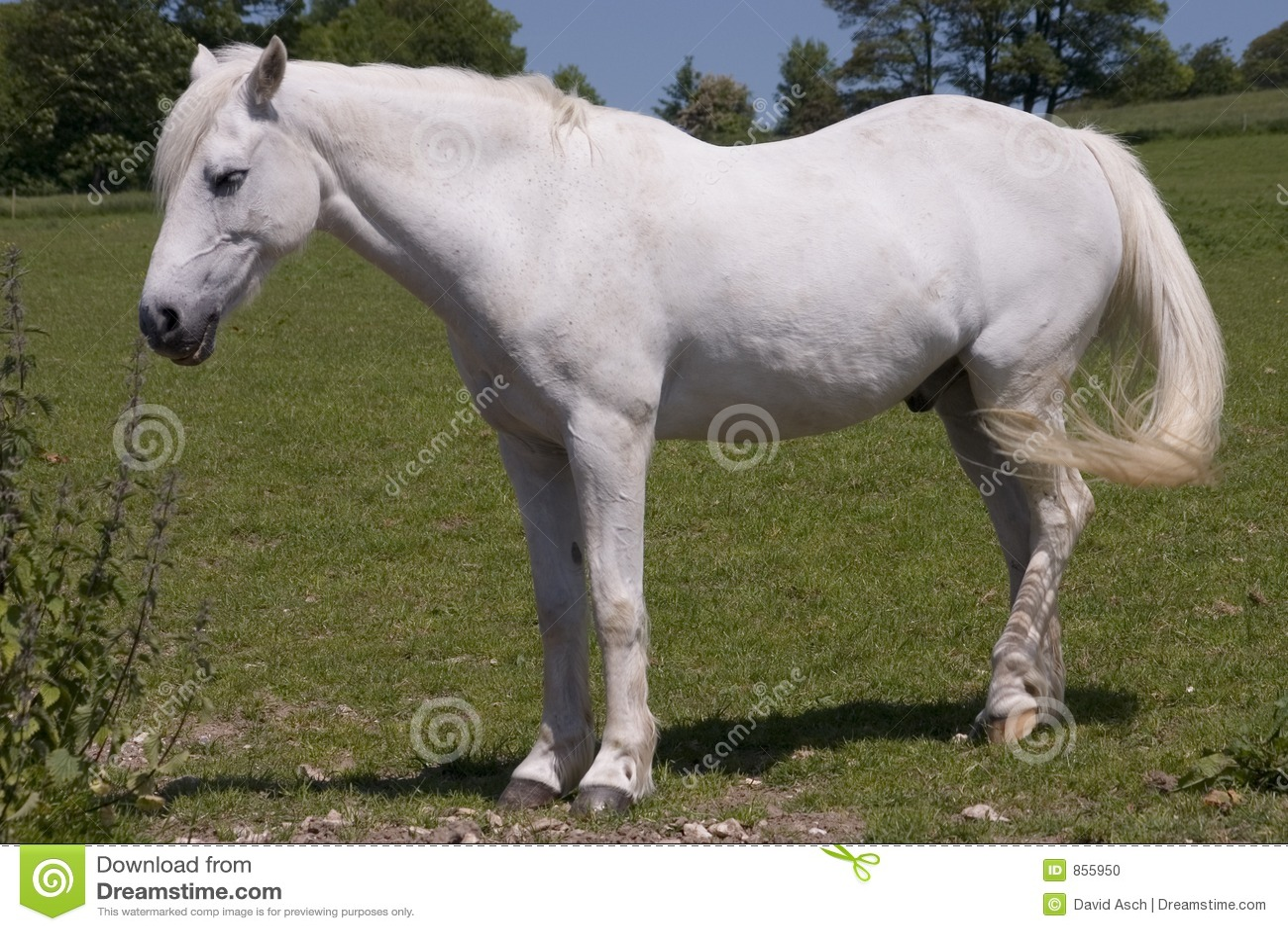 2 white horse