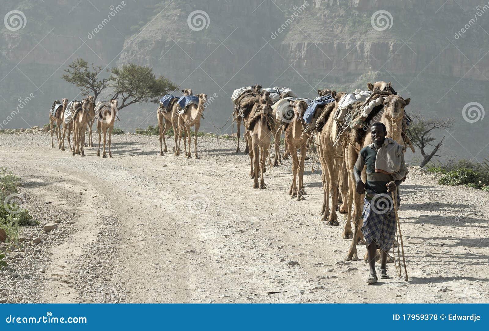 2 wielbłądów karawana