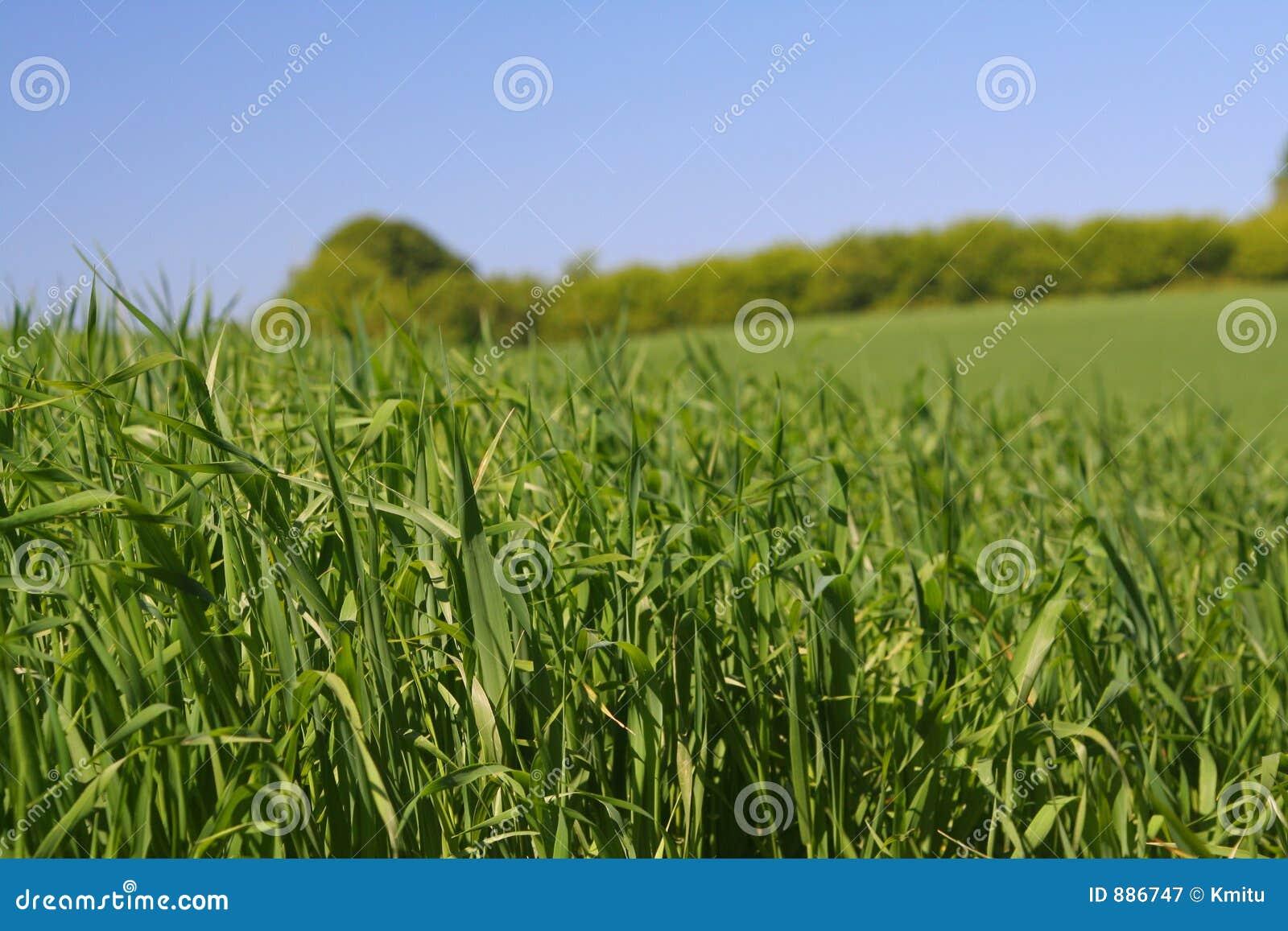 2 zielone bogactwa trawy