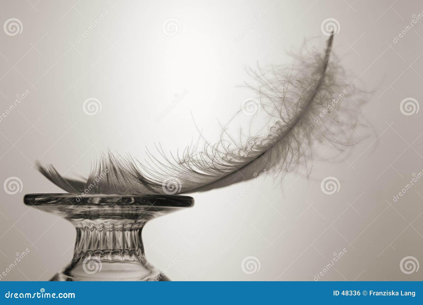 作为羽毛光