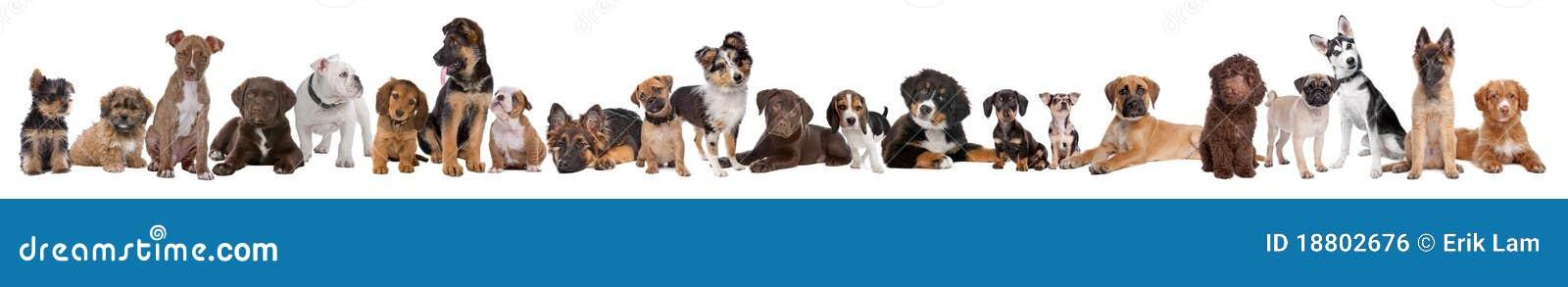 22 perros de perrito en una fila