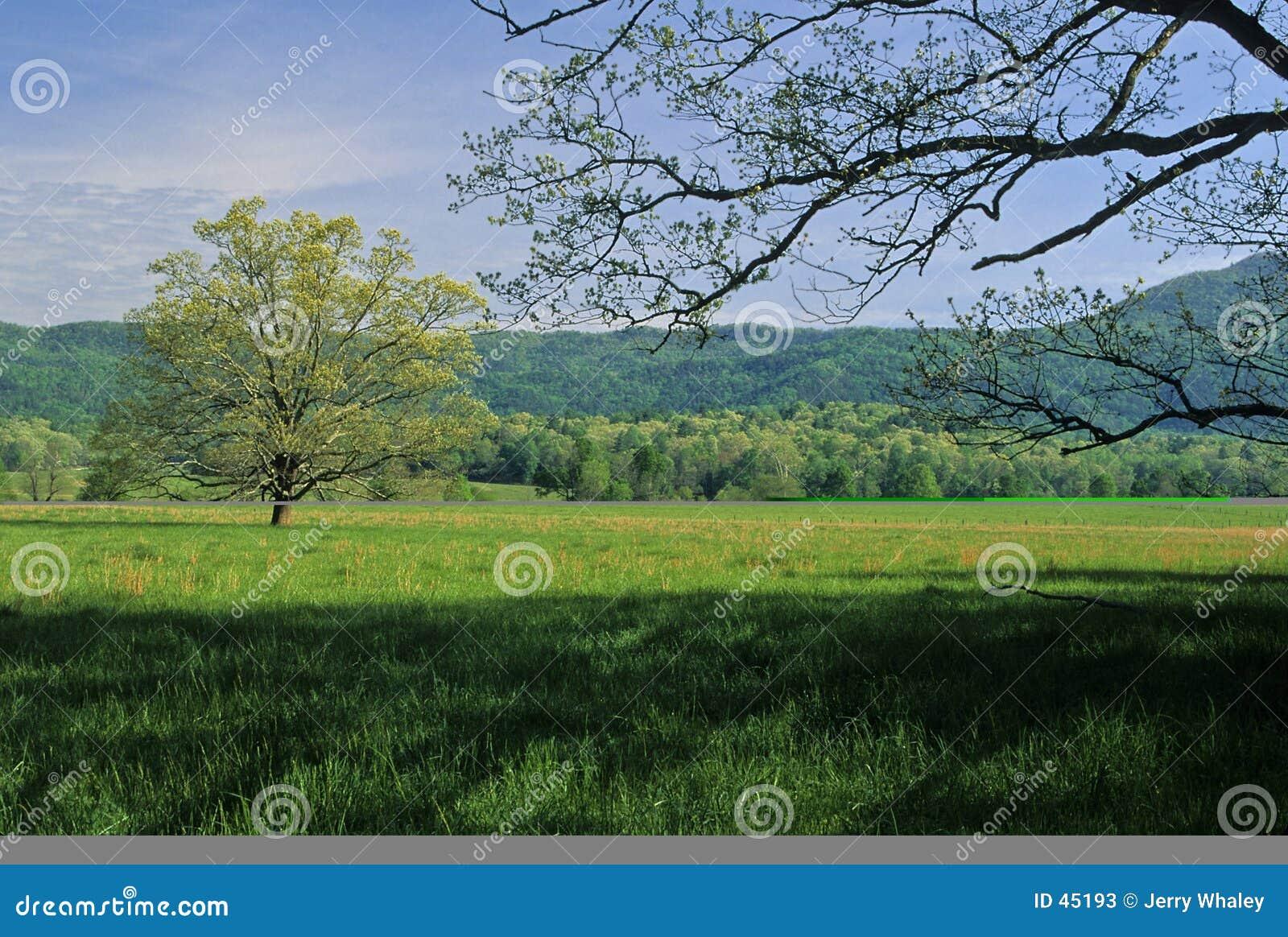 域春天结构树