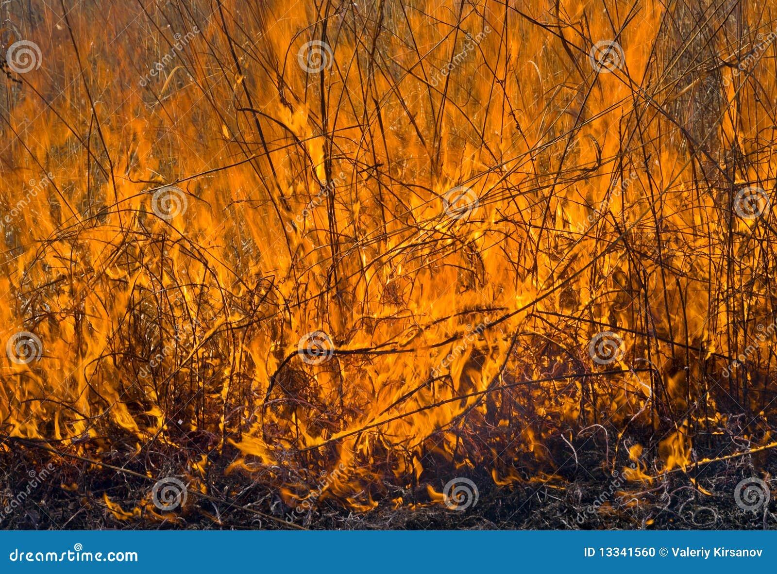 23 brushfire płomień