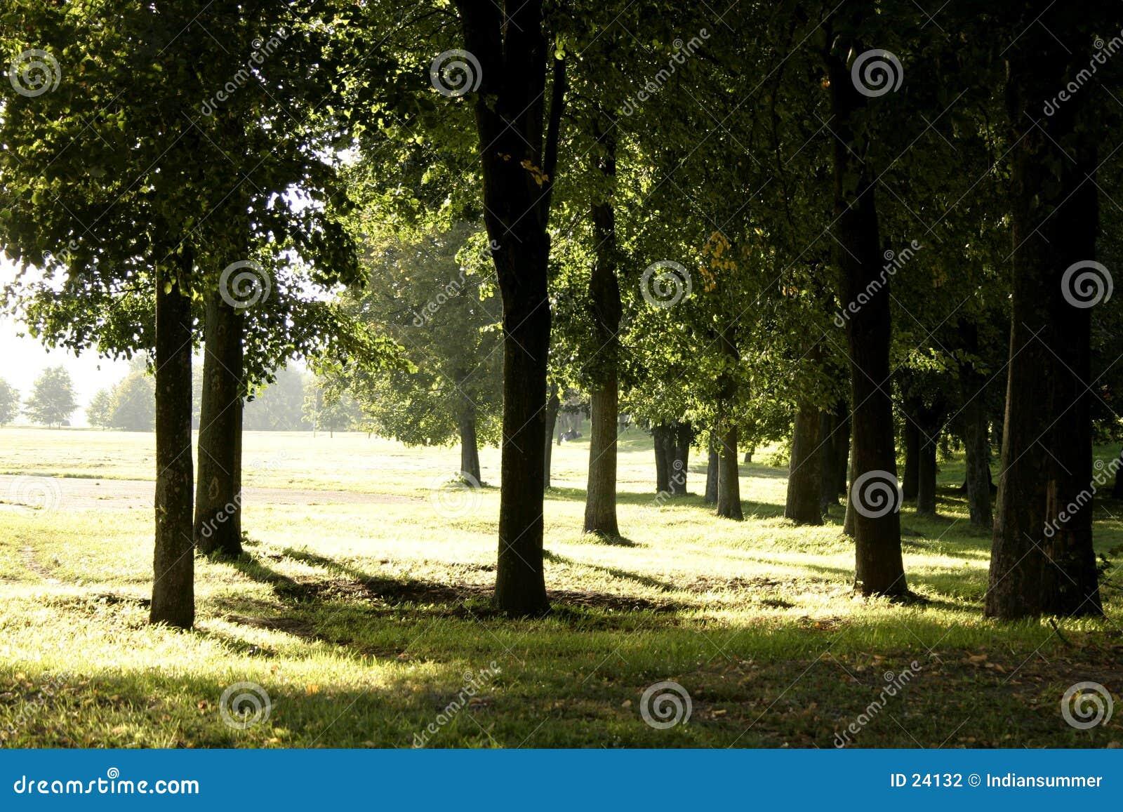 平衡ii温暖的公园