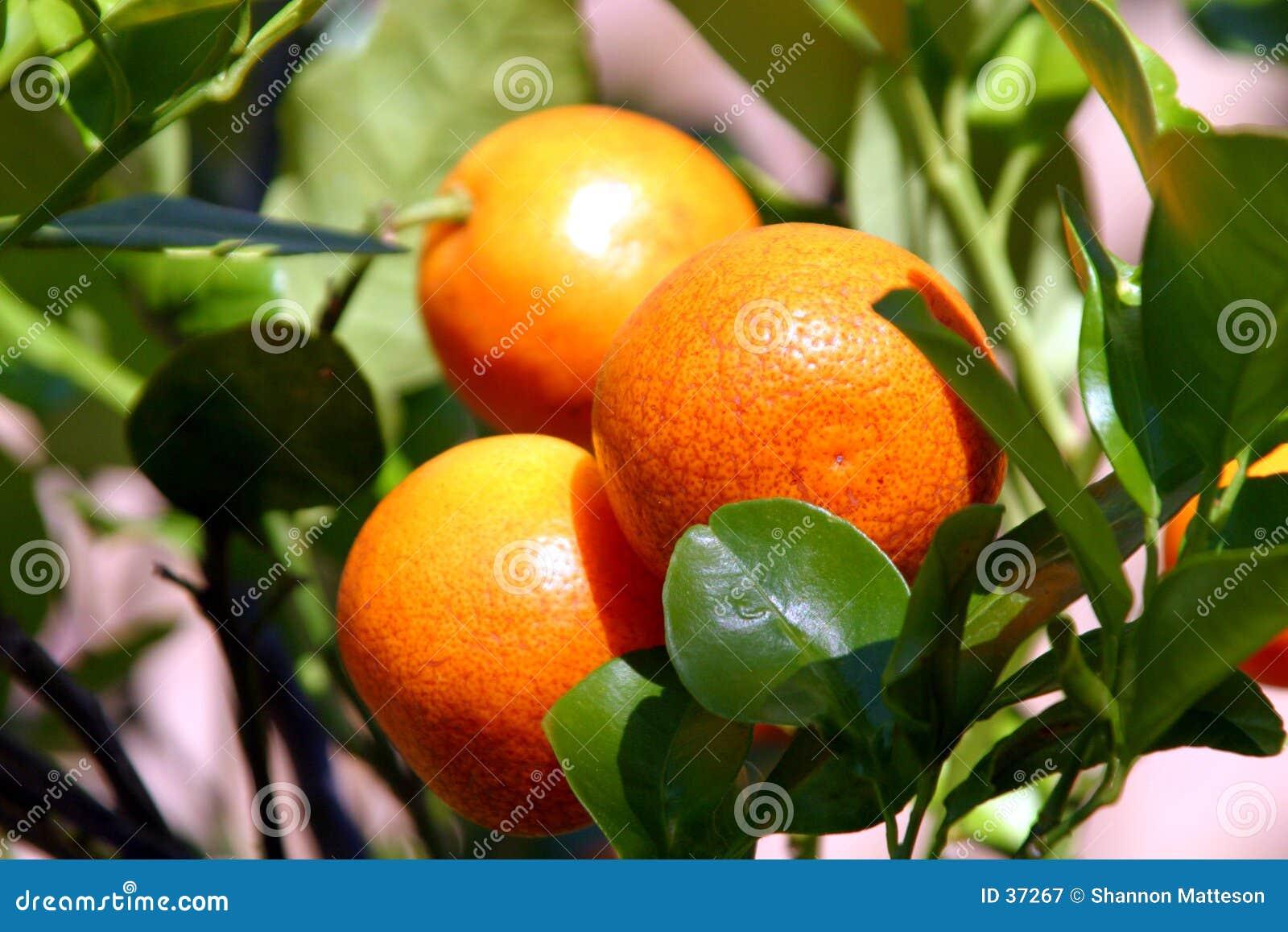 新鲜的柑橘