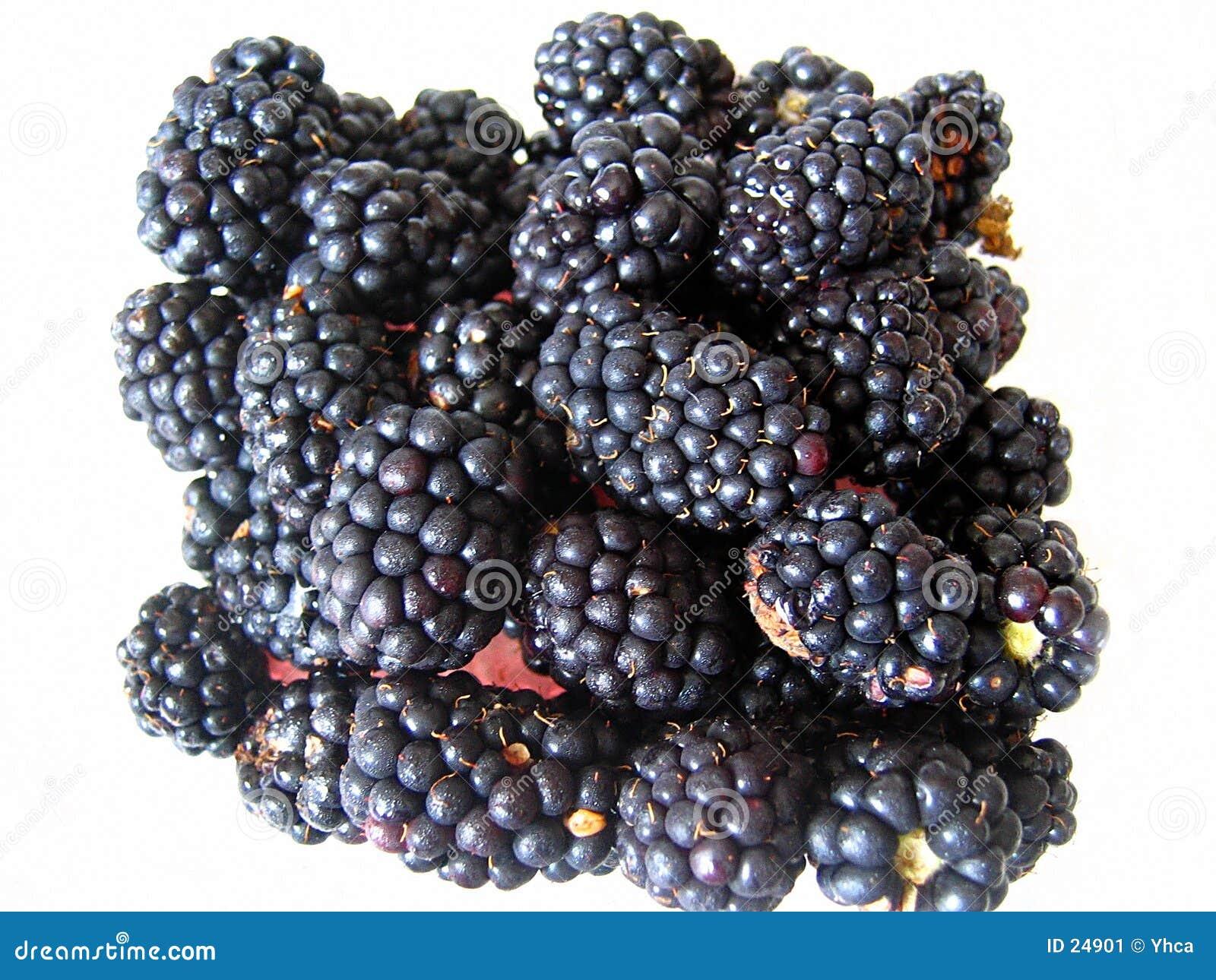 新鲜黑莓的字符串