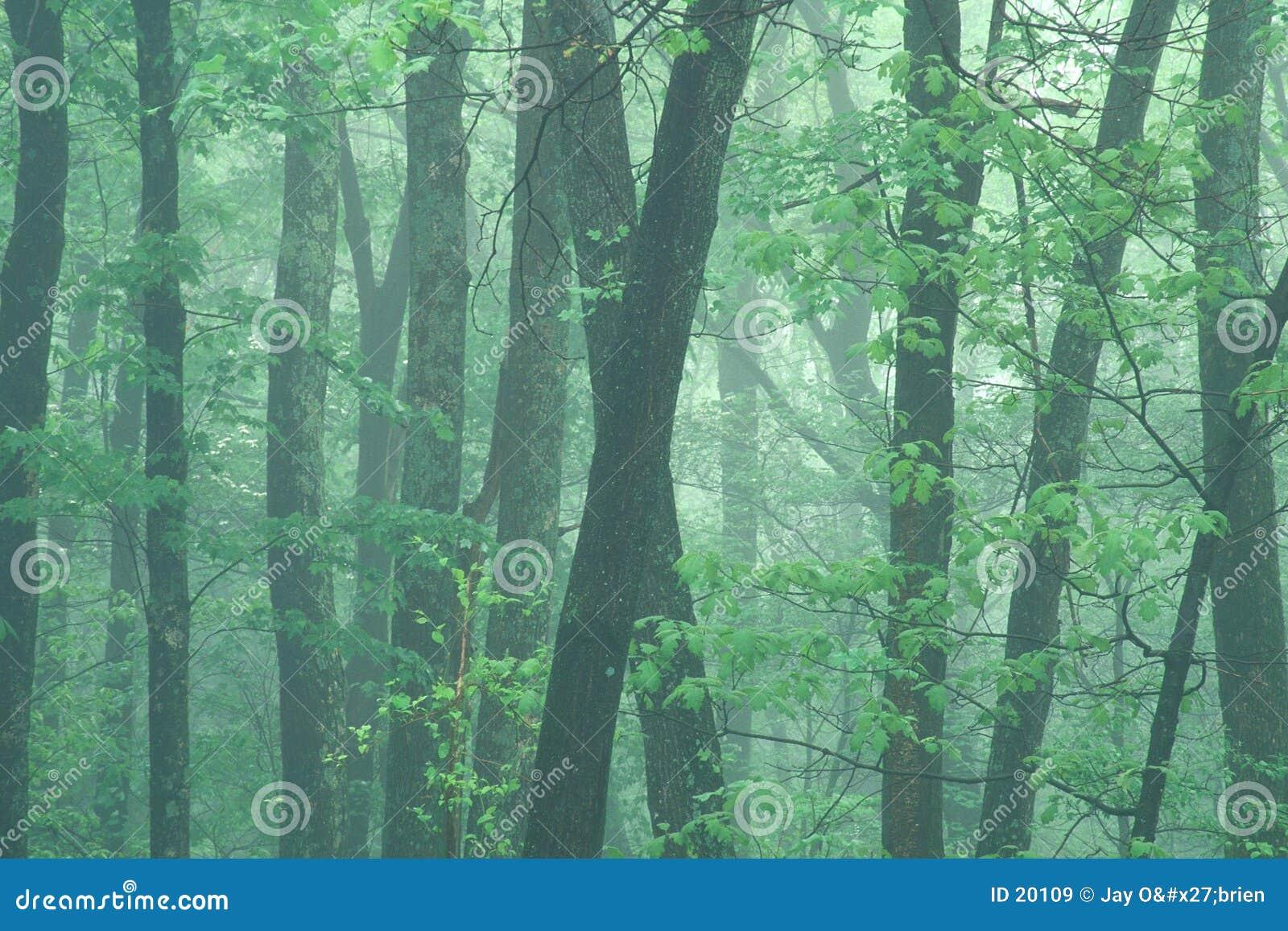 有薄雾的早晨春天