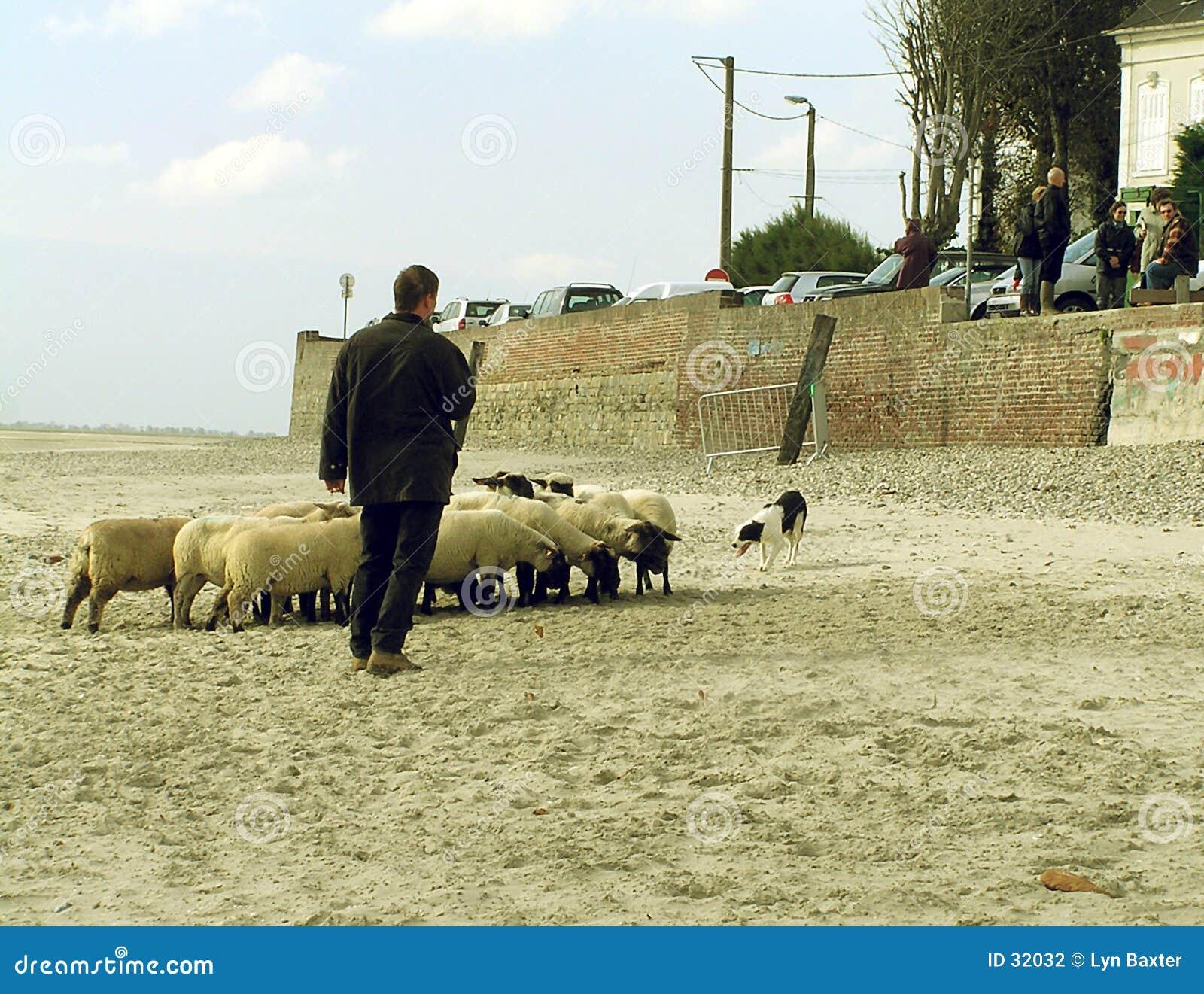 沙子牧羊人