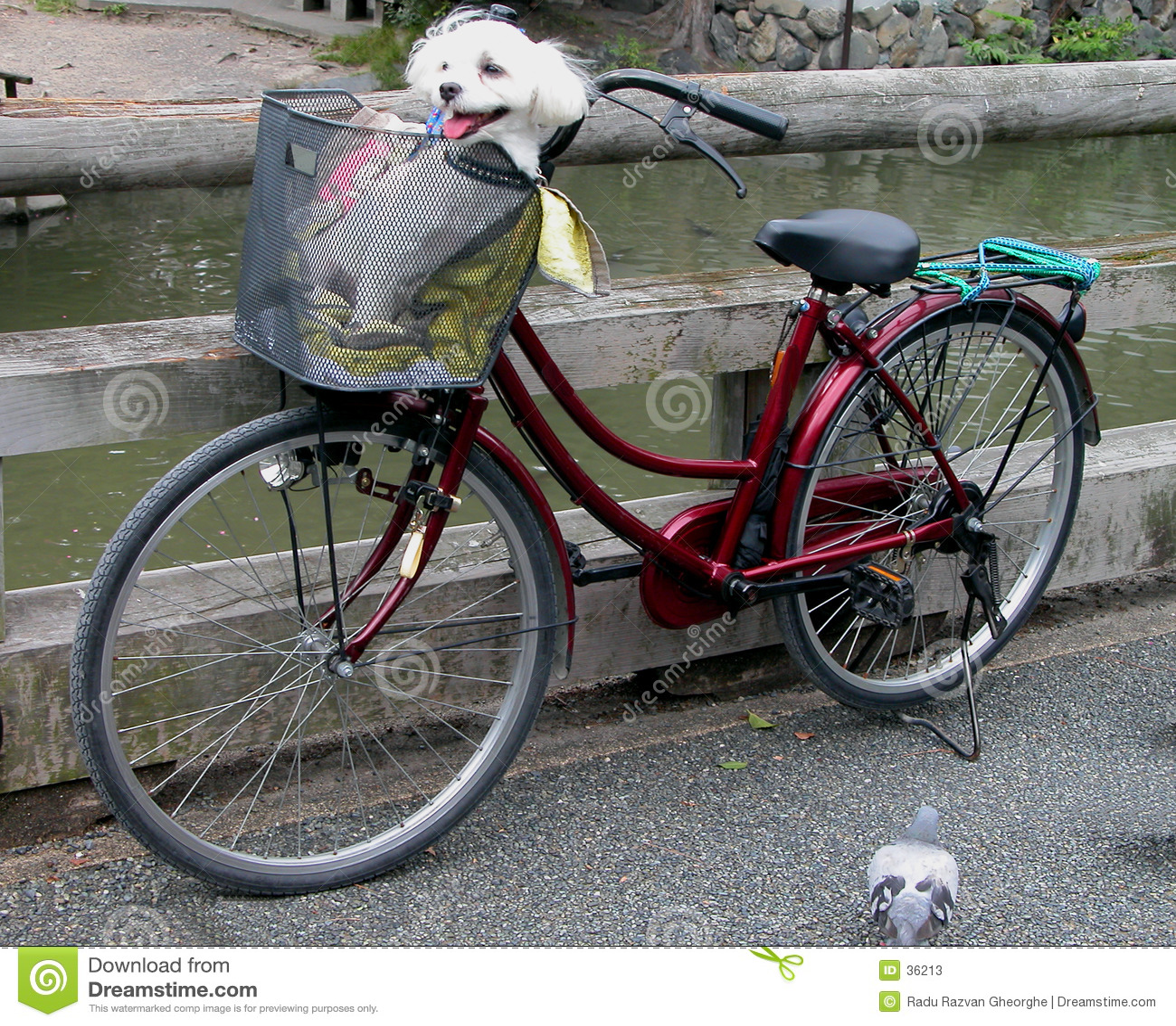 滑稽的自行车