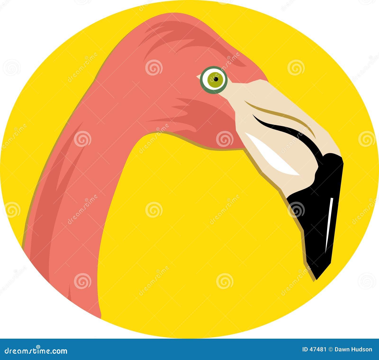 火鸟粉红色
