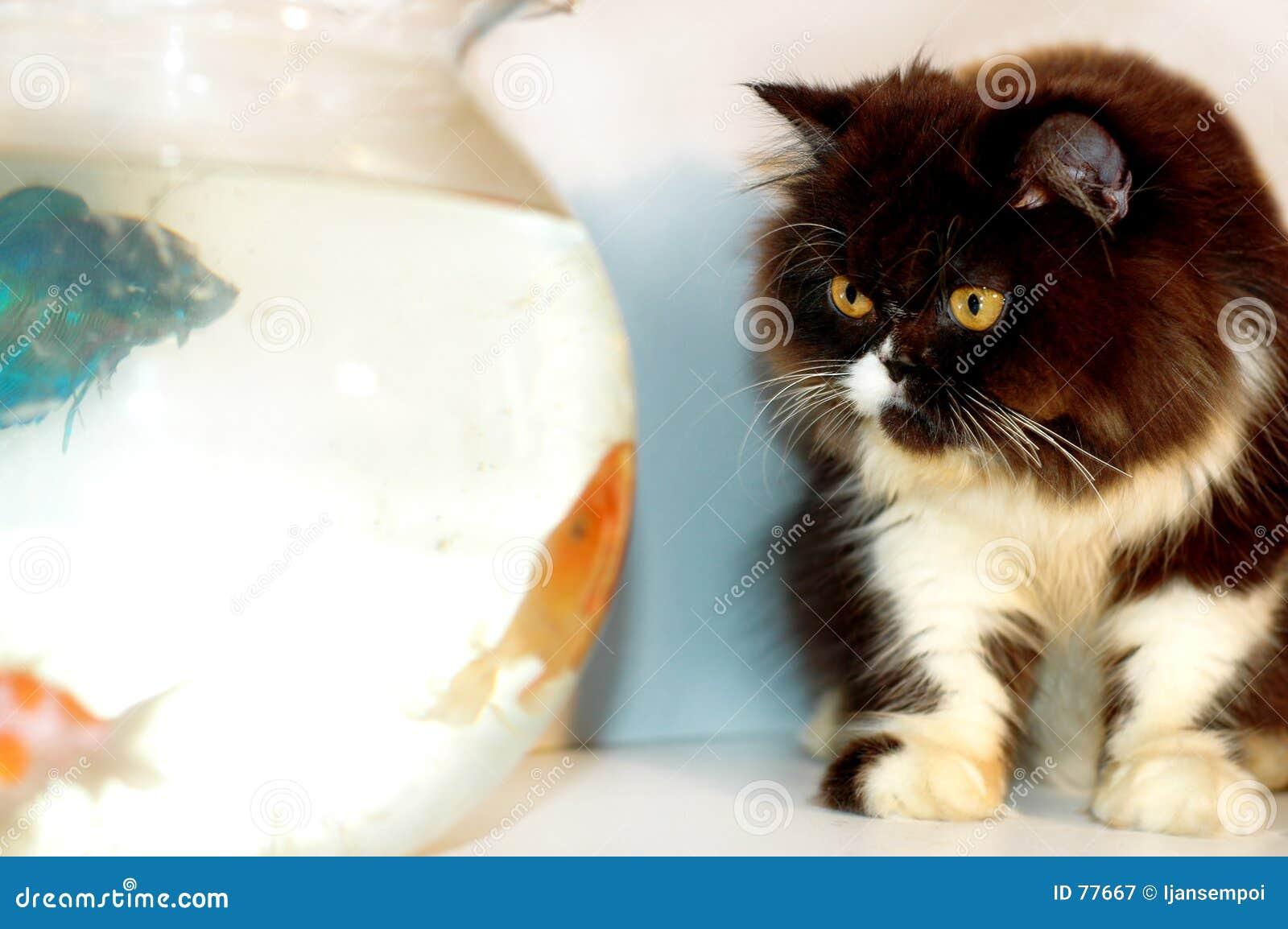 3条猫鱼金子查找