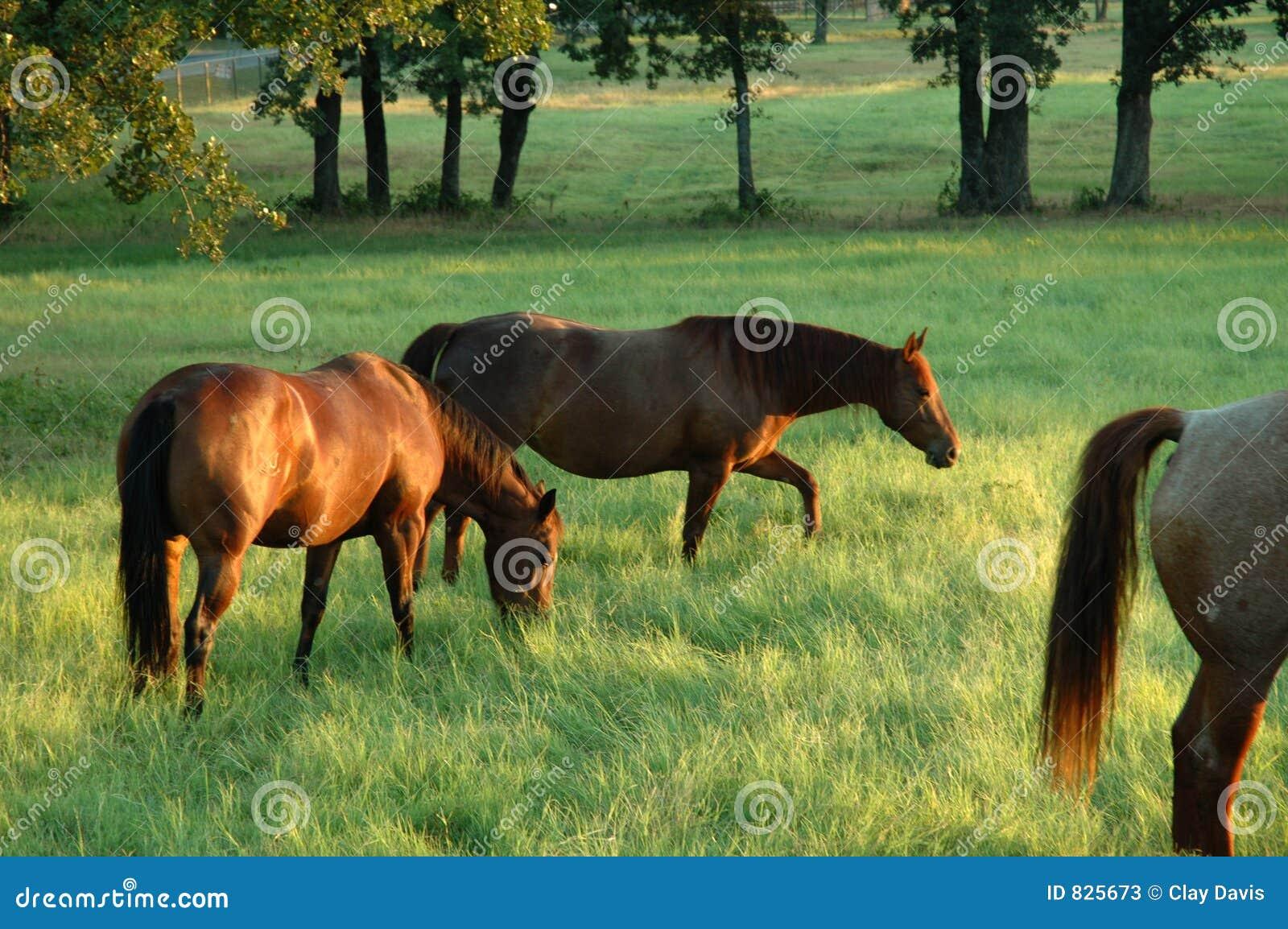 3 άλογα