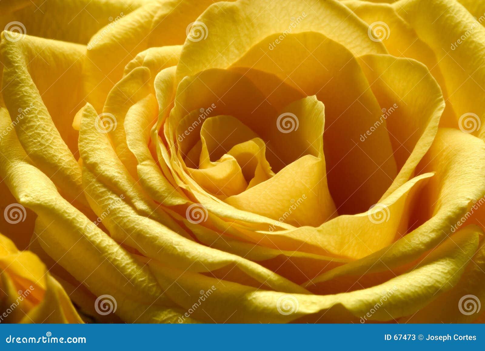 3 αυξήθηκαν κίτρινος