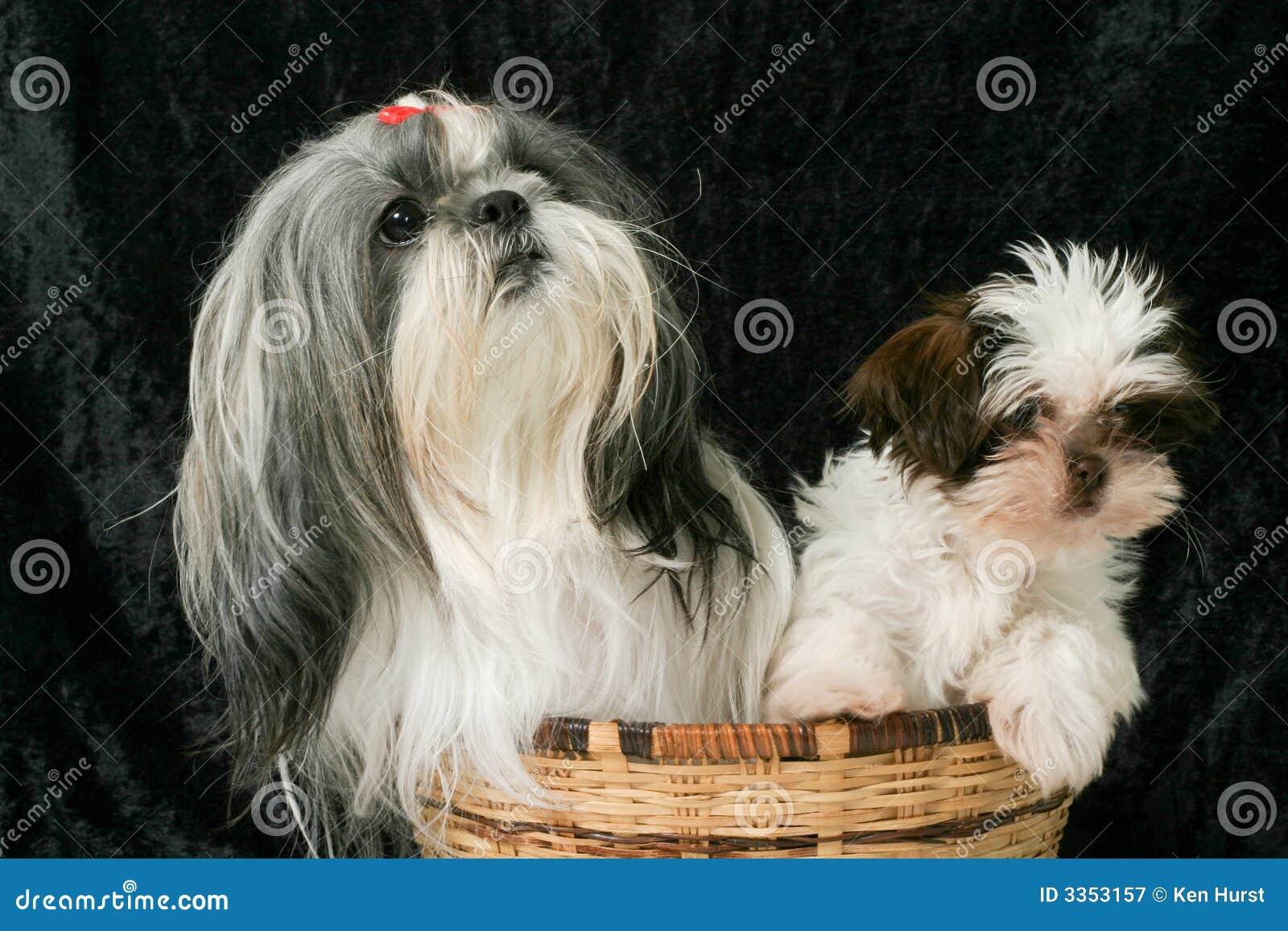 3 σκυλιά δύο καλαθιών