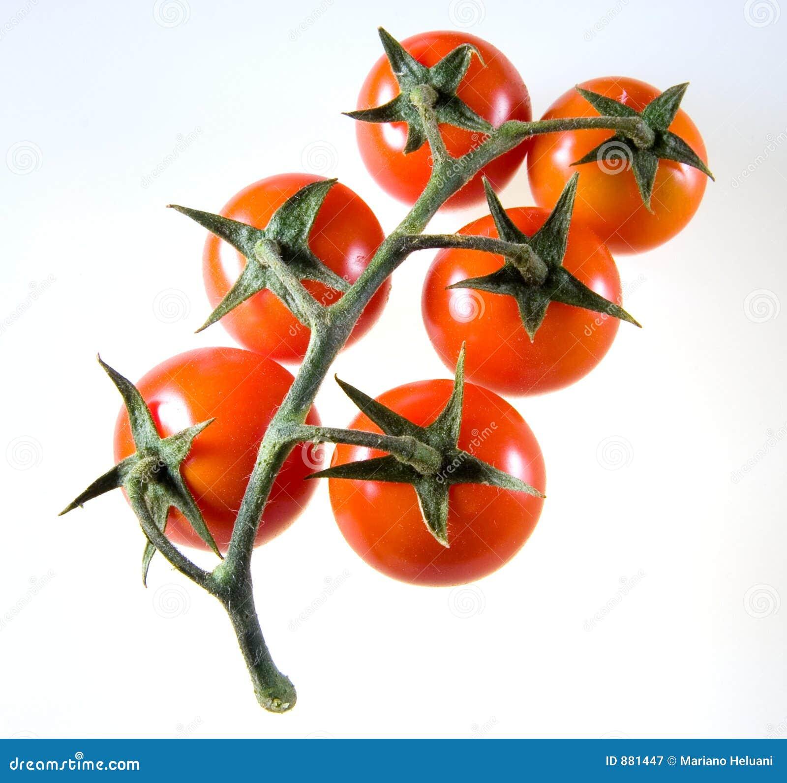 3 amunicji kasetowej pomidor serii