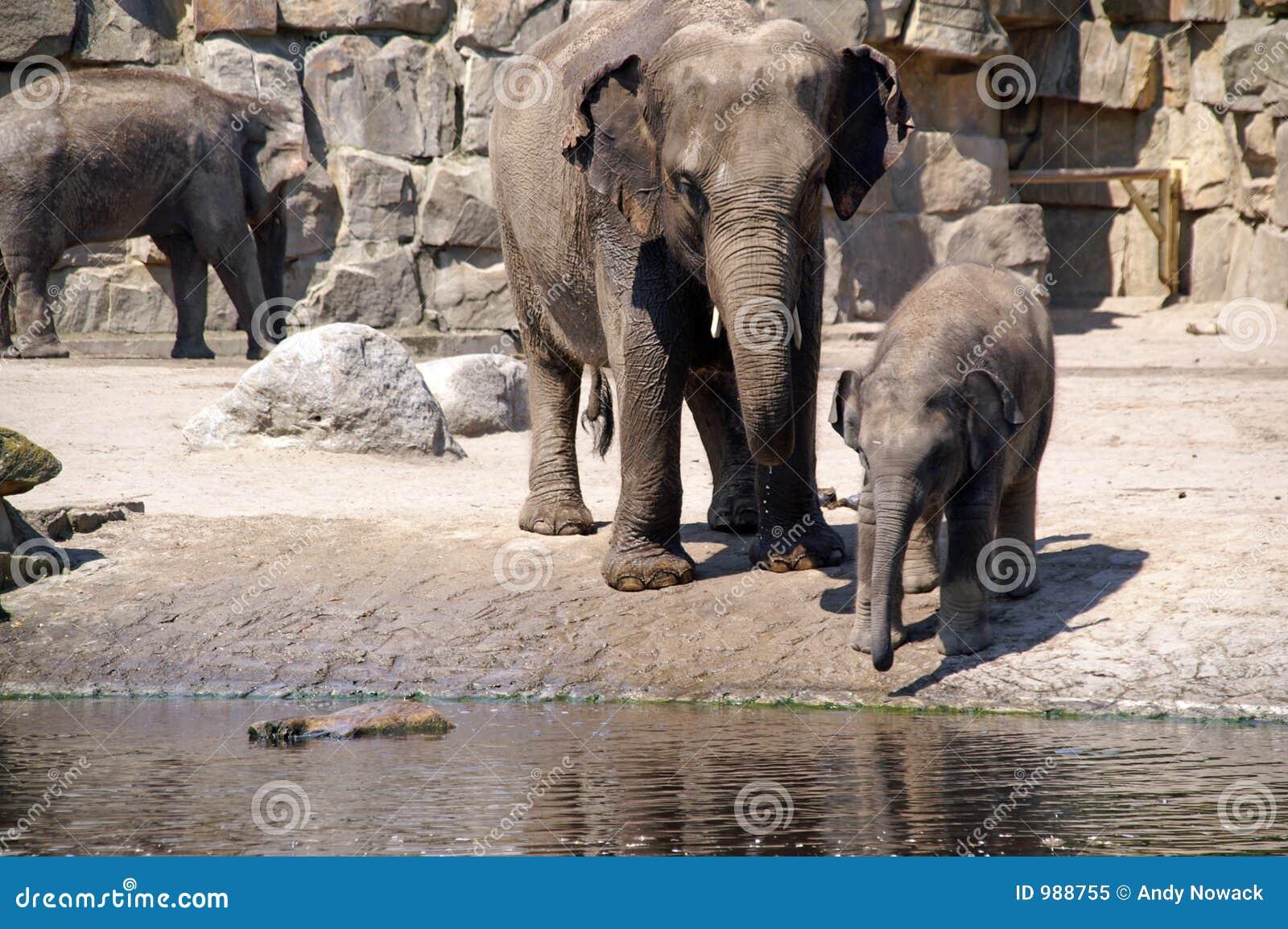 3 behandla som ett barn drinkelefanten lärer till