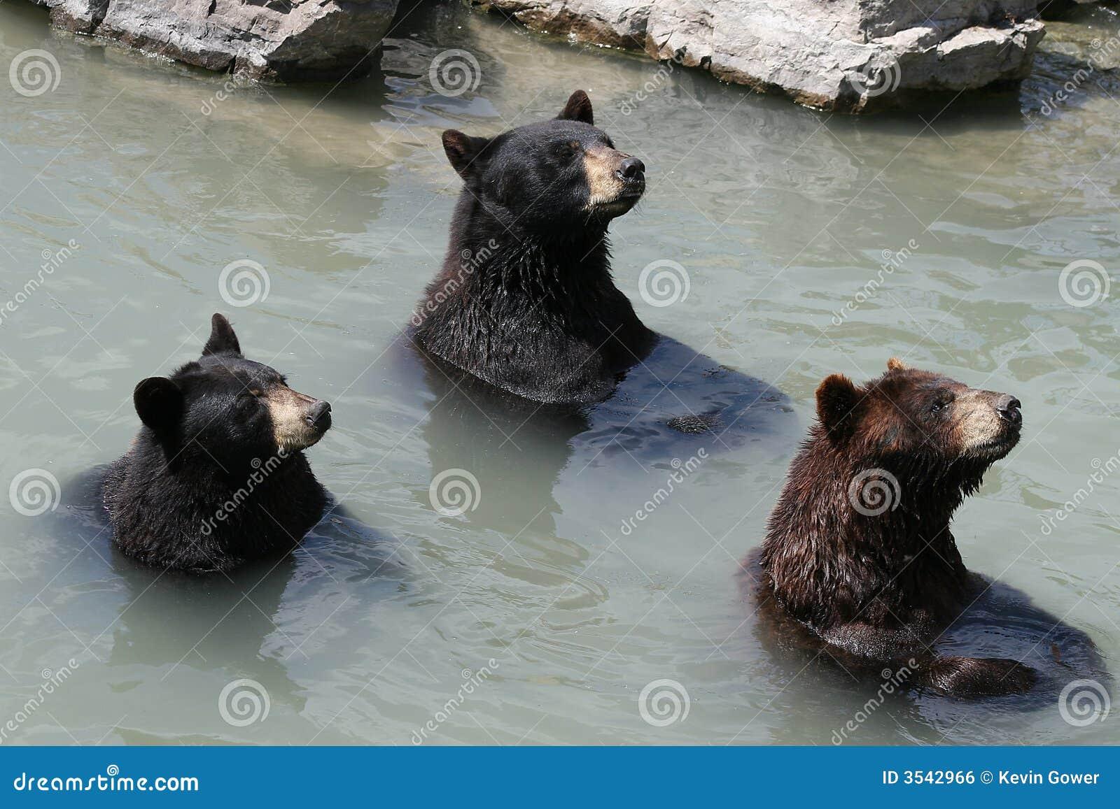 3 björnar