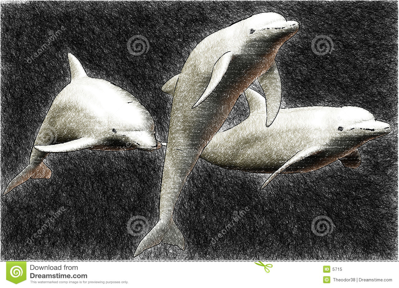 3 dolphin sketch