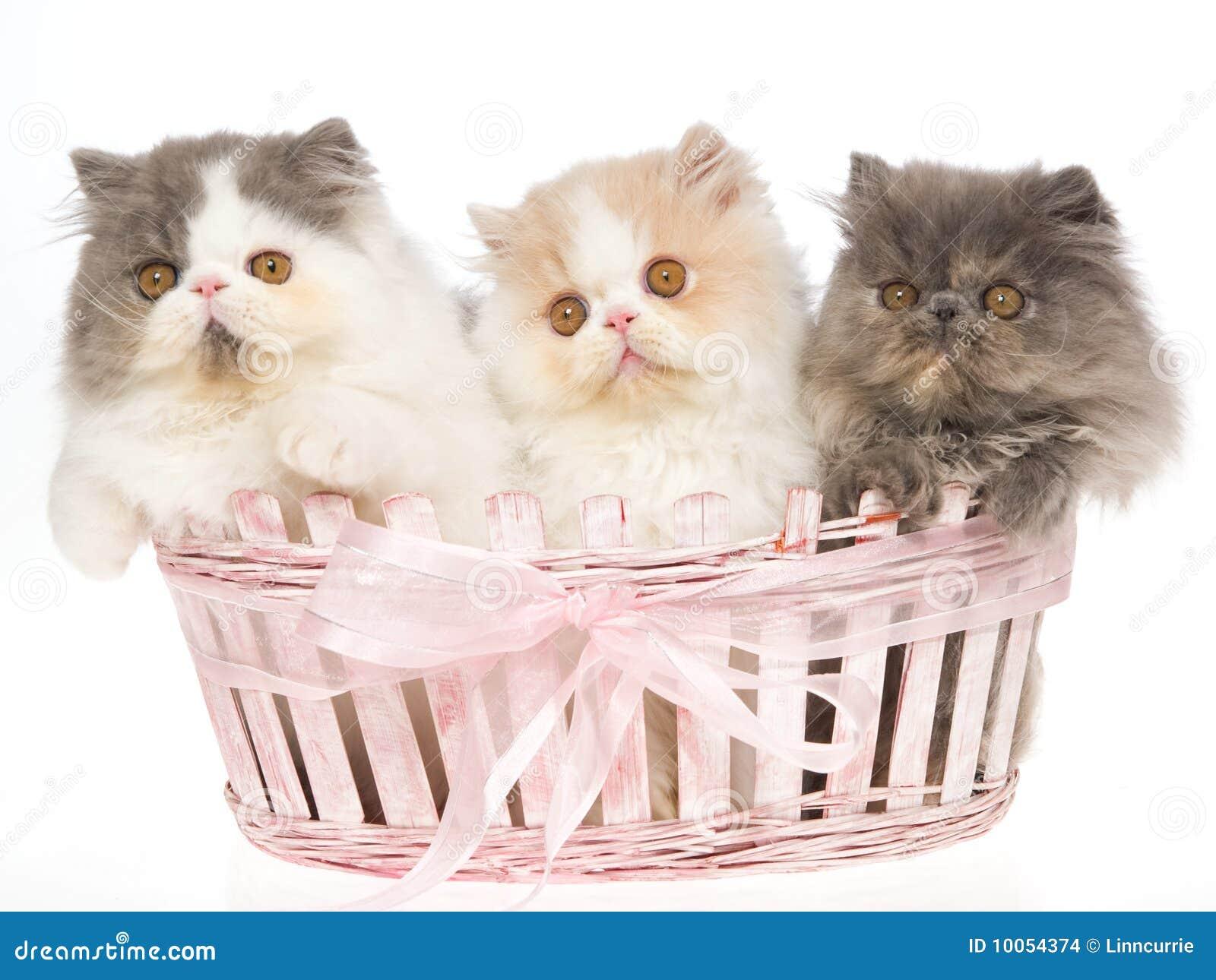 Nomes para gatos (www.tuta.com/gatinhos)