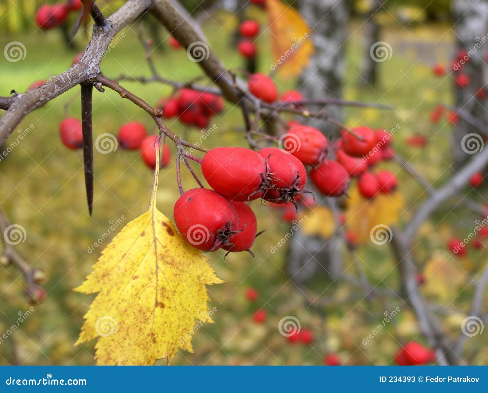 3 jesieni
