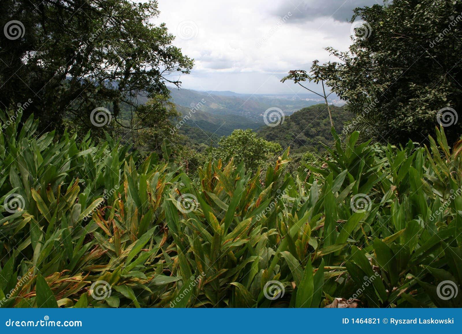 3 os mais cloudforest tropicais
