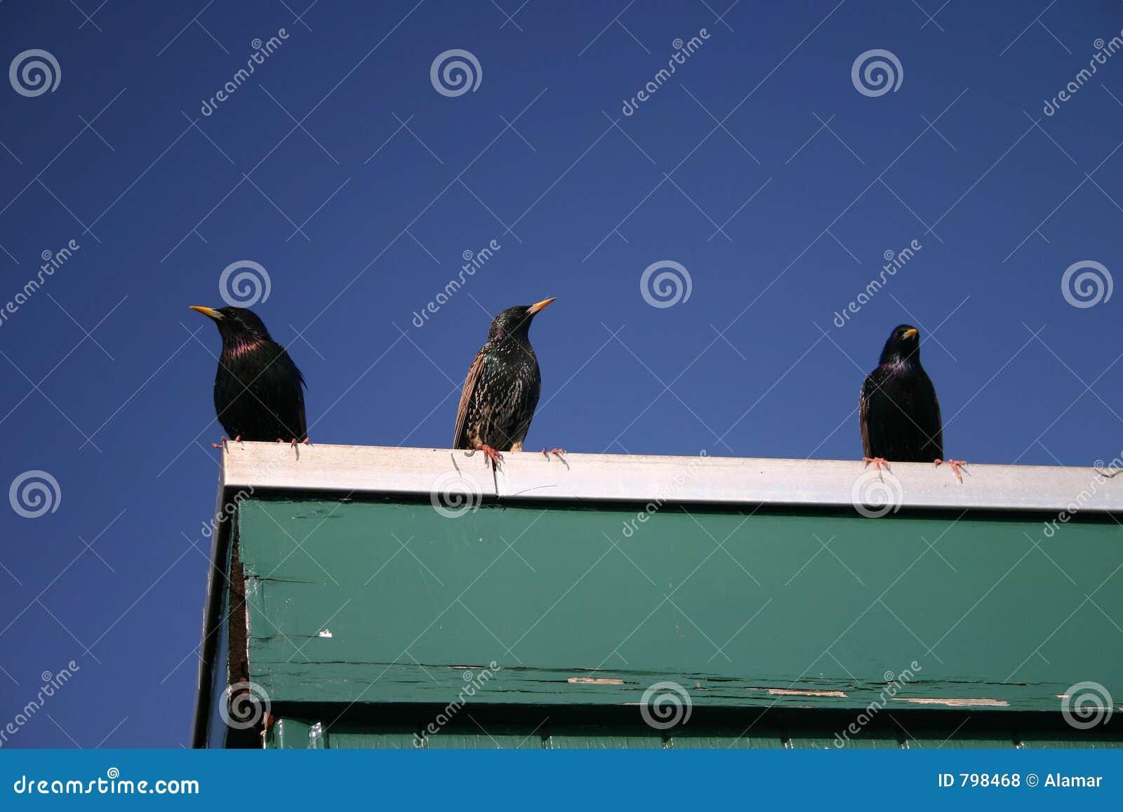 3 ptaka