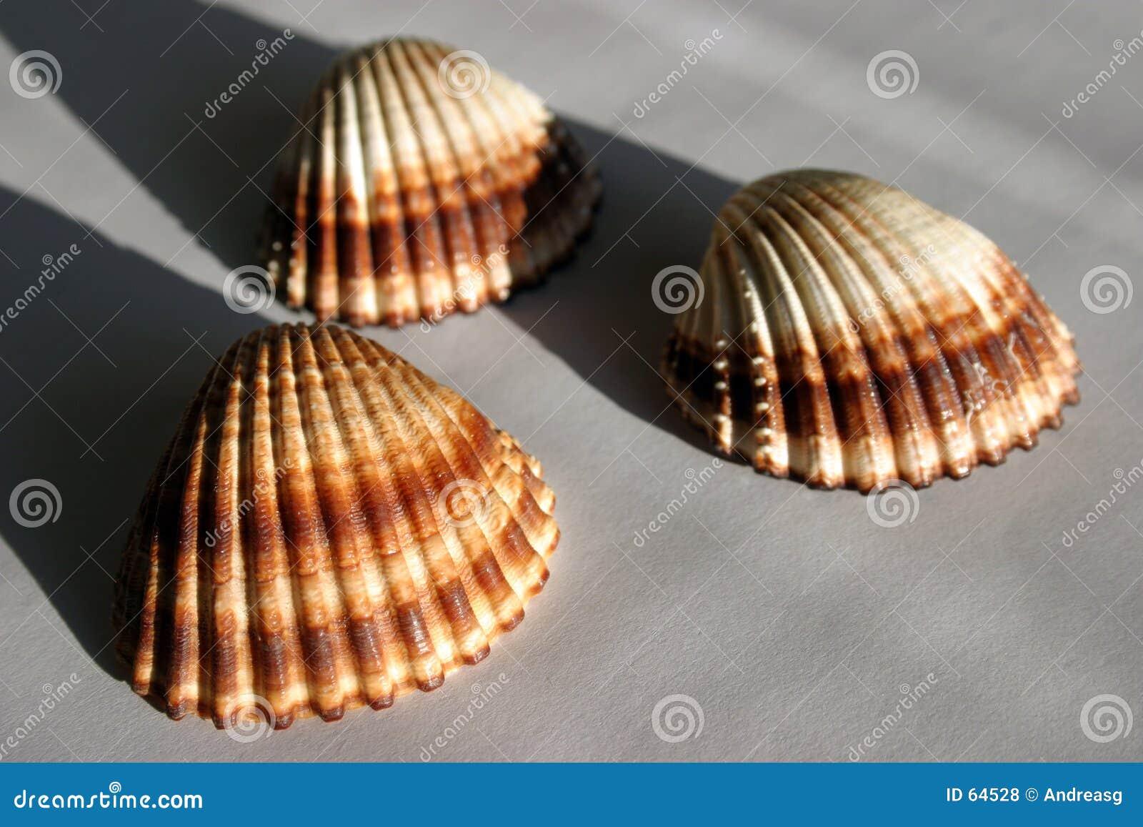 3 shelles