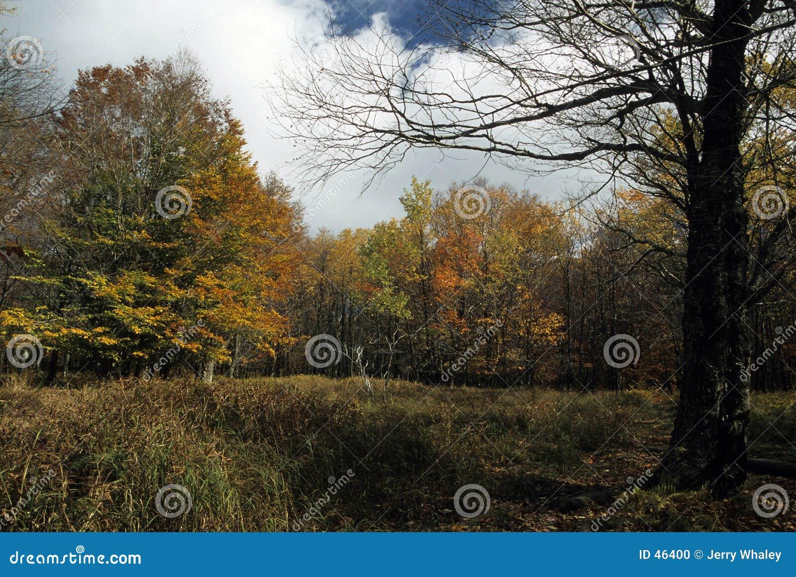 秋天移动式摄影车风景草皮