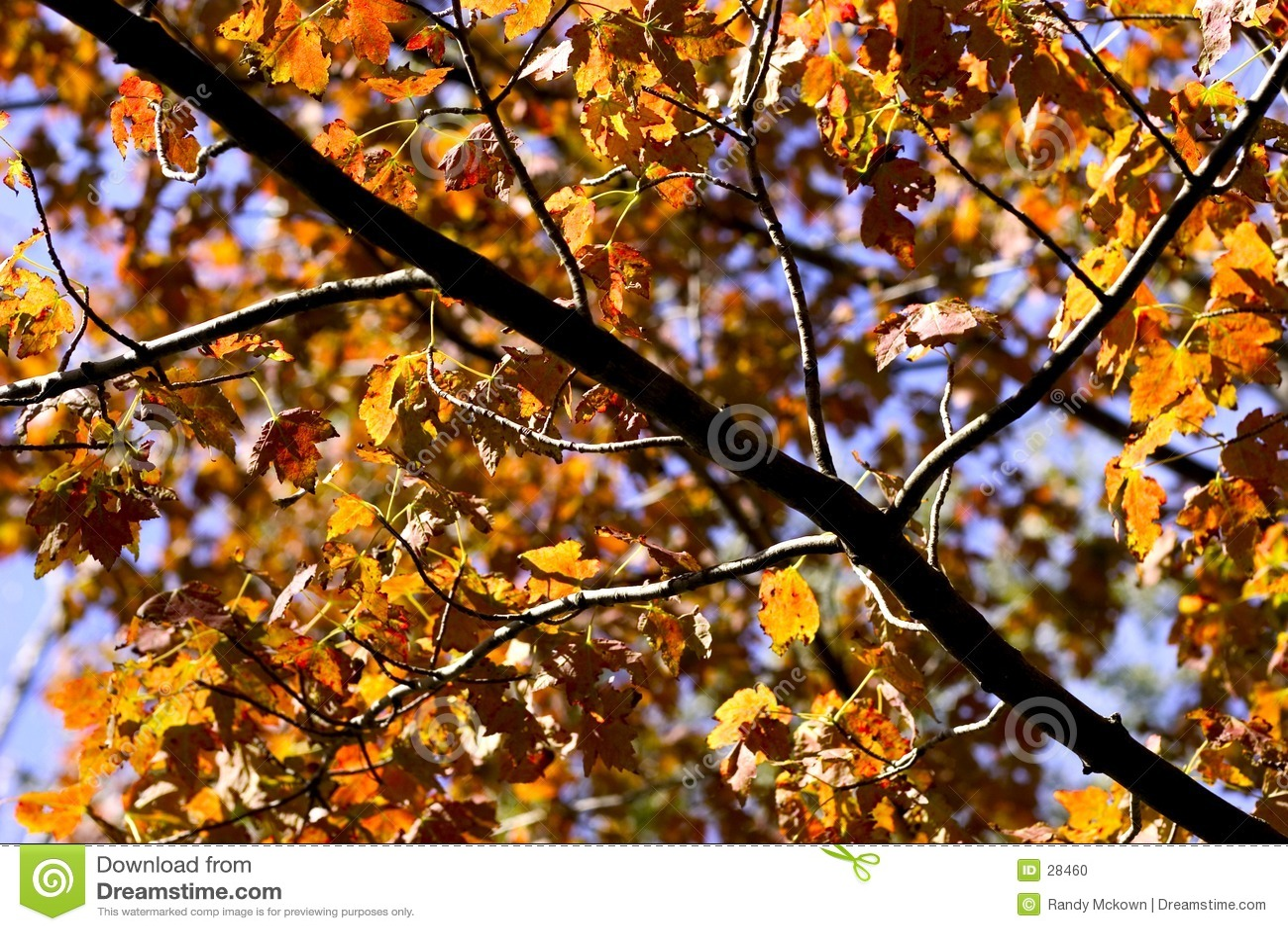 秋天金黄叶子