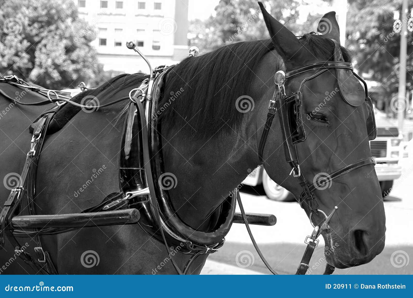 被利用的马