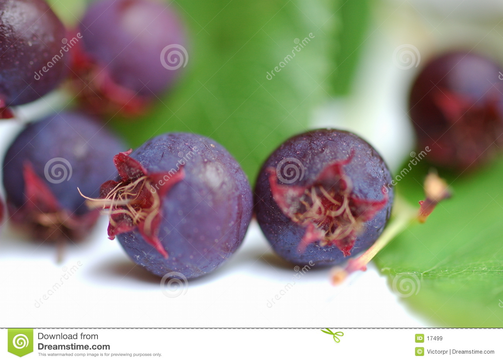 通配的浆果