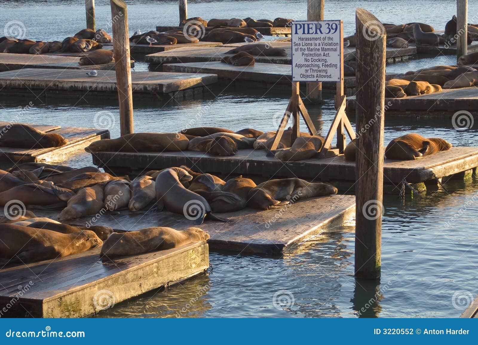 39头狮子码头海运