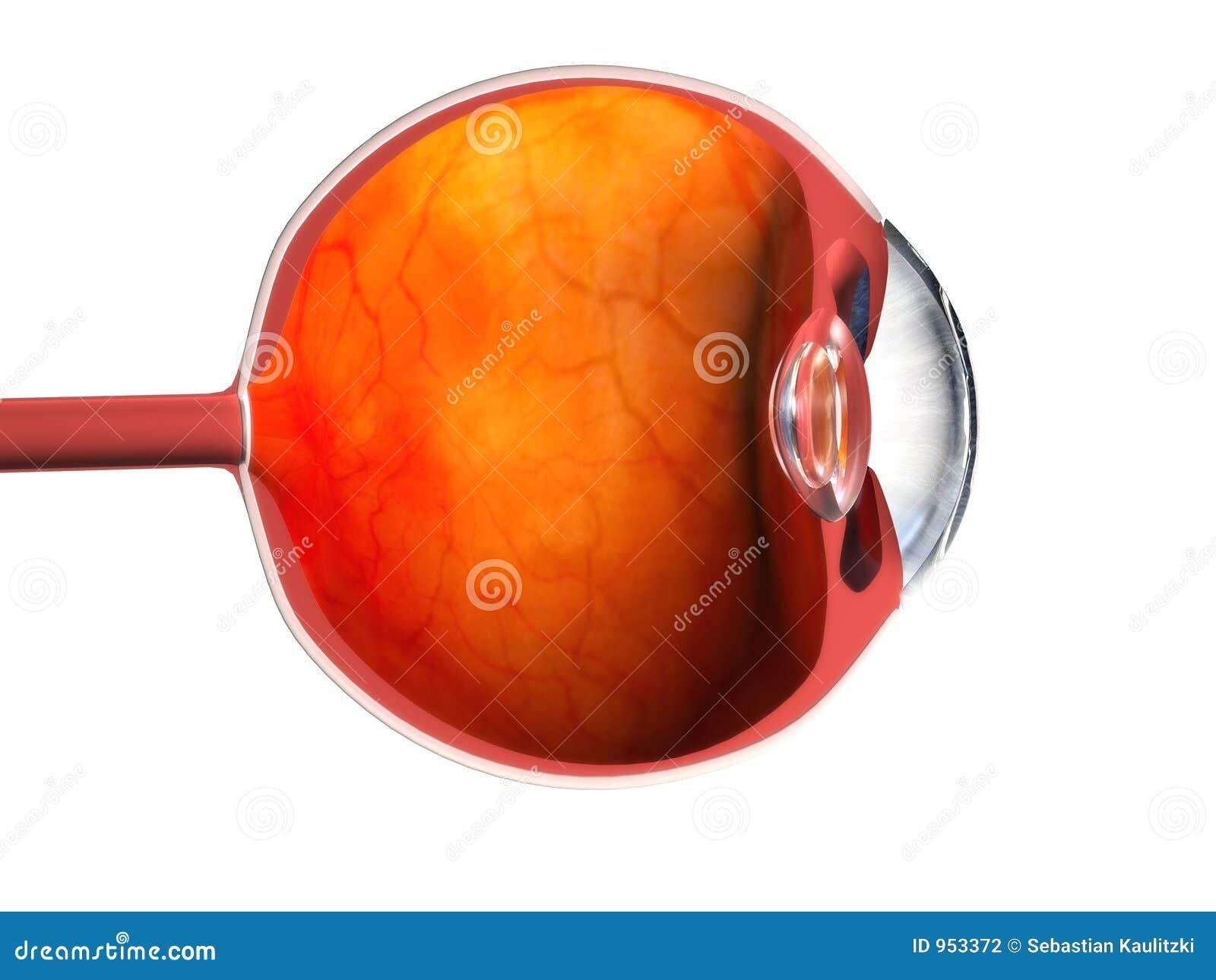3d eye stock illustration  Illustration of view, pupil - 953372