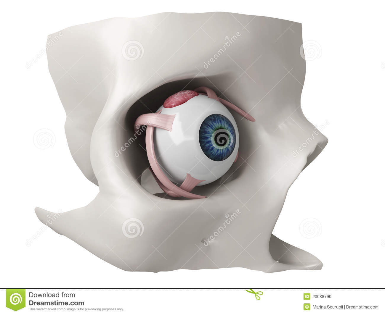 3d eye anatomy model stock illustration. Illustration of healthcare ...