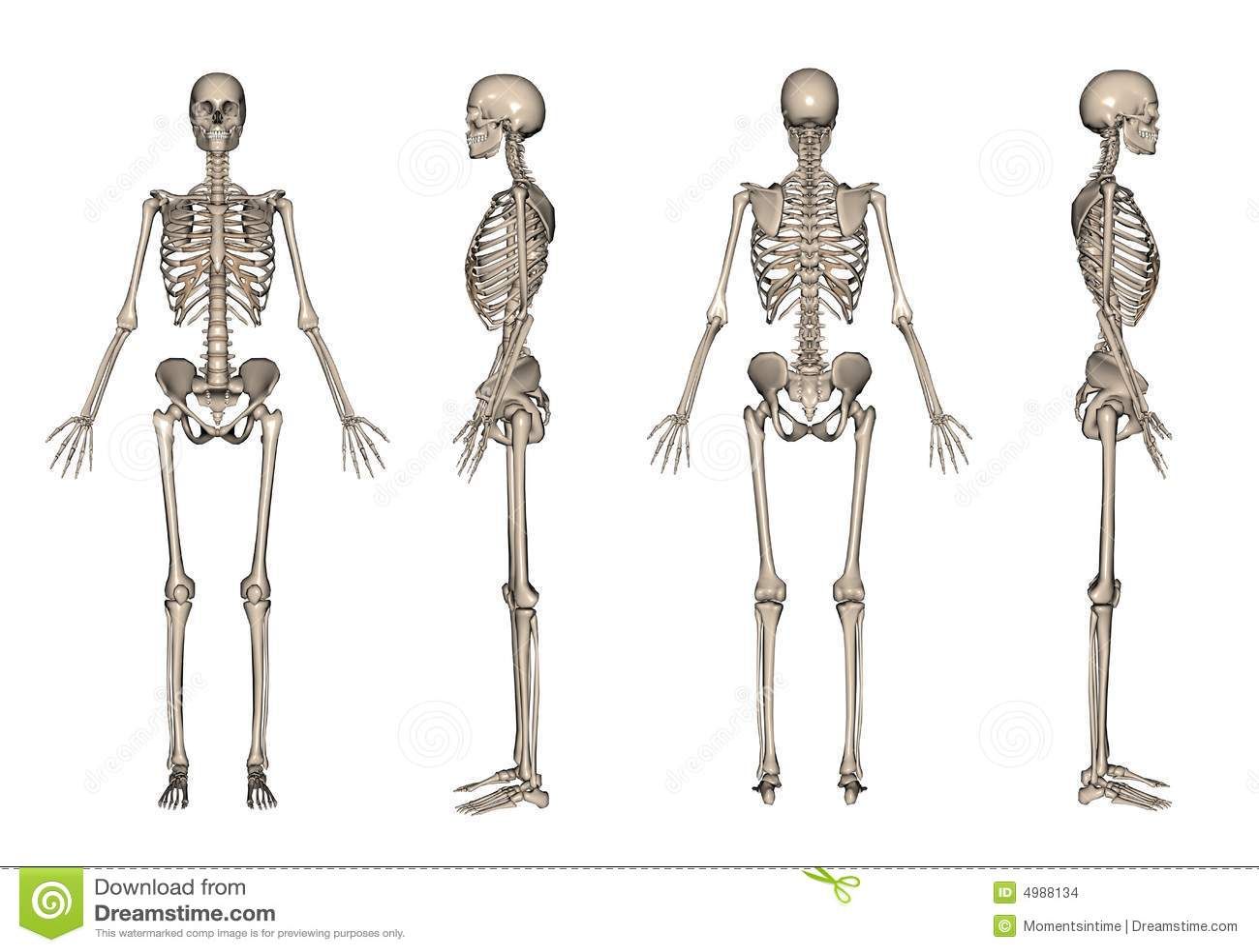 3d framför skelett