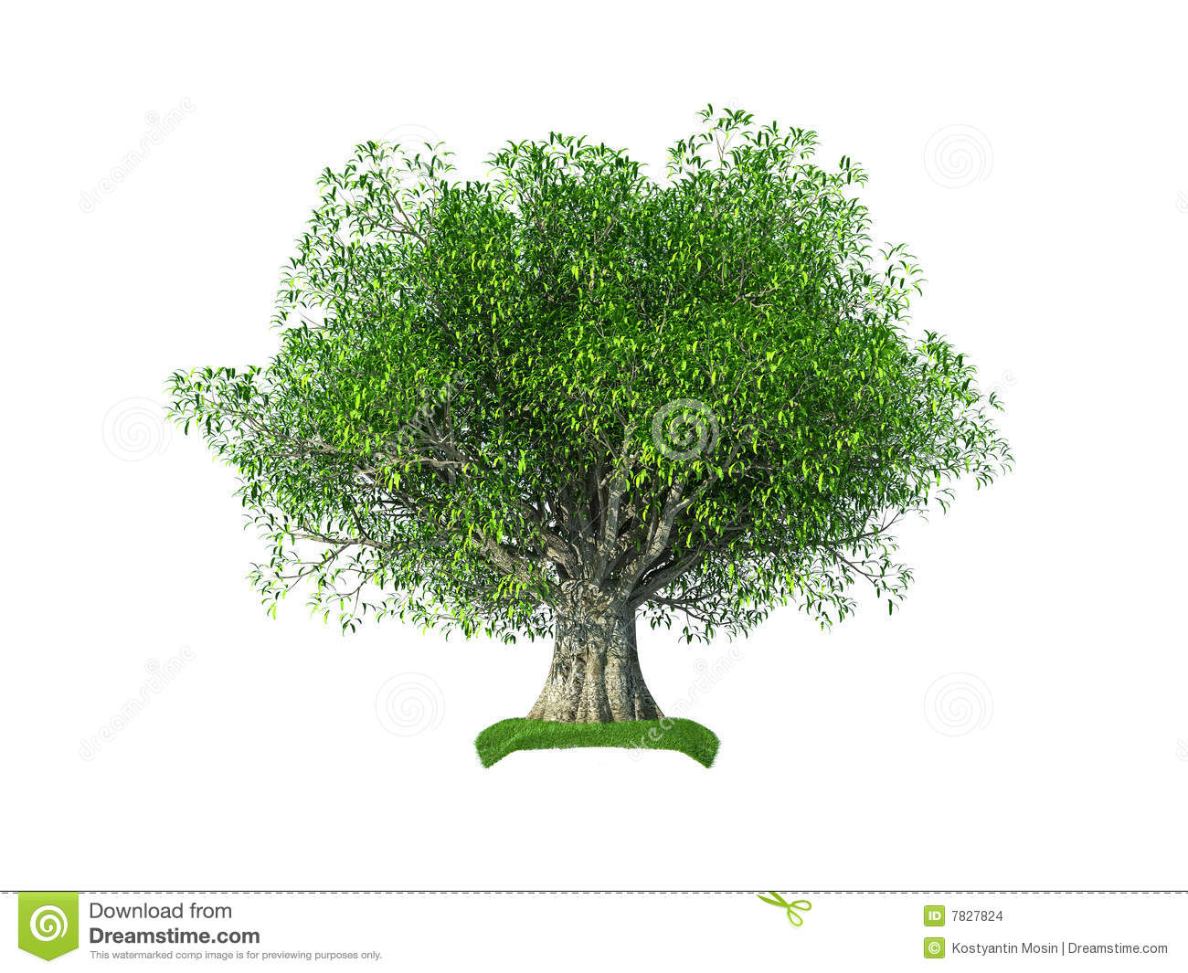 Render of the 3d olive tree isolated on the white background.