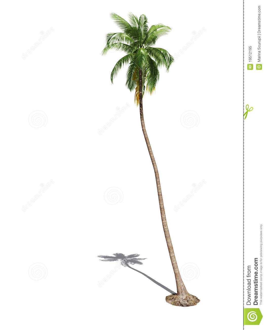 3d palm tree stock image  Image of foliage, fronds, botany - 19512195