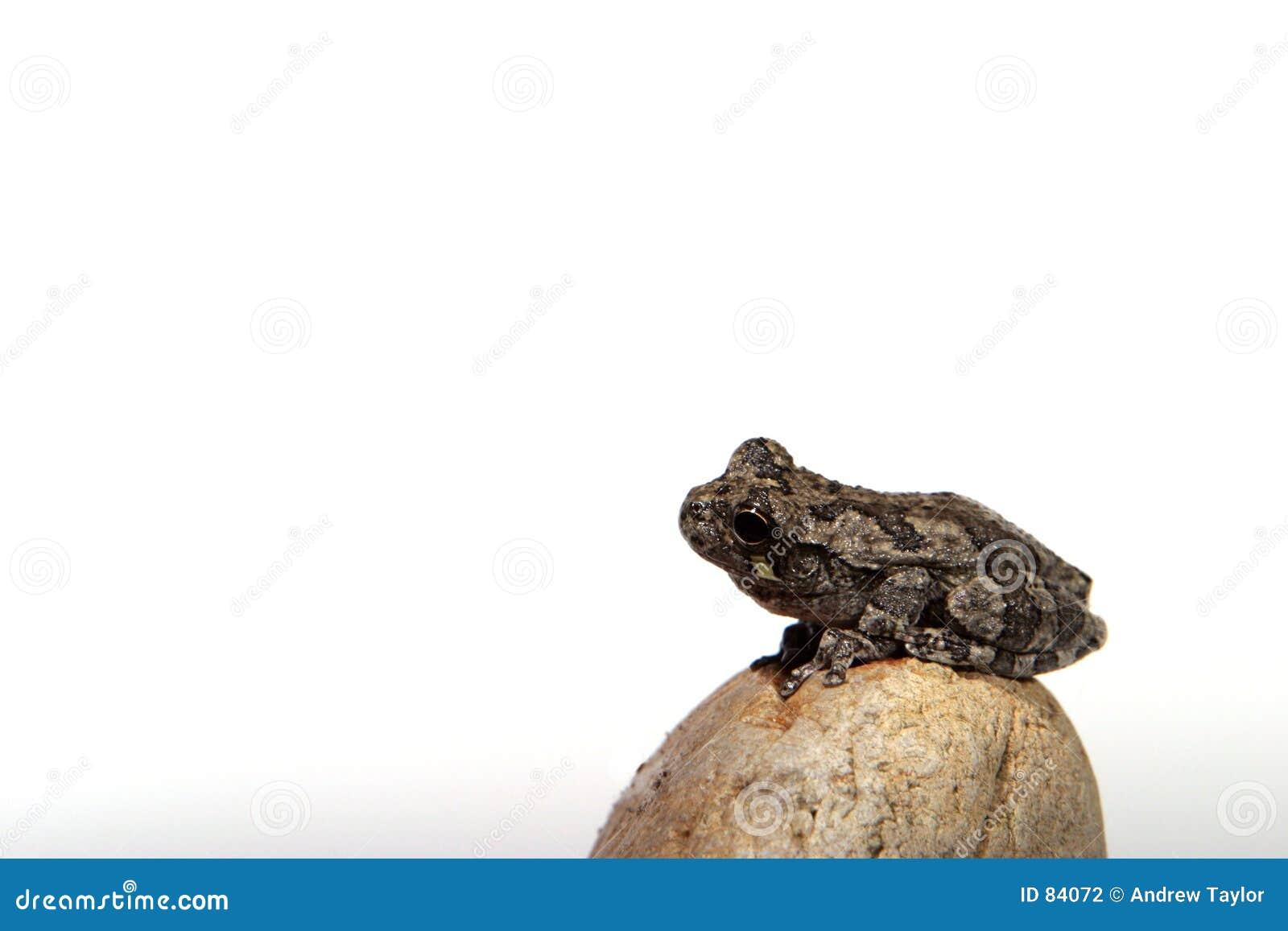 4 żaba