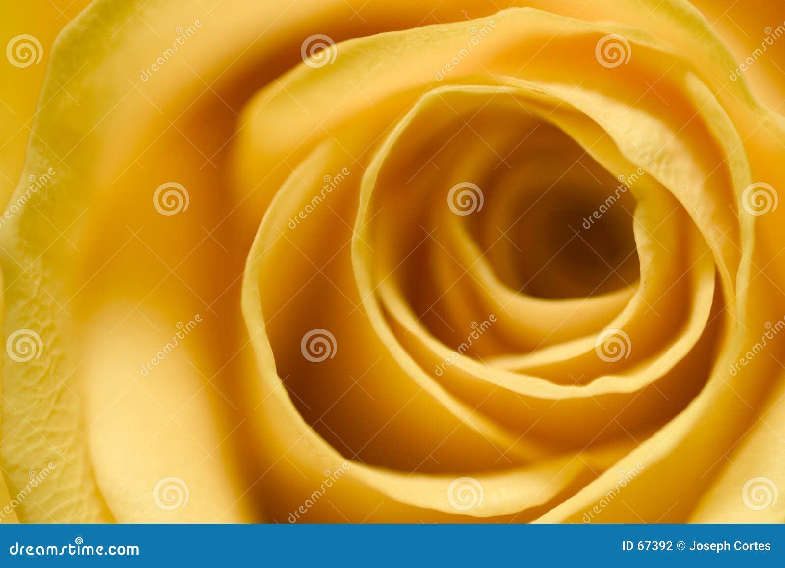 4 αυξήθηκαν κίτρινος