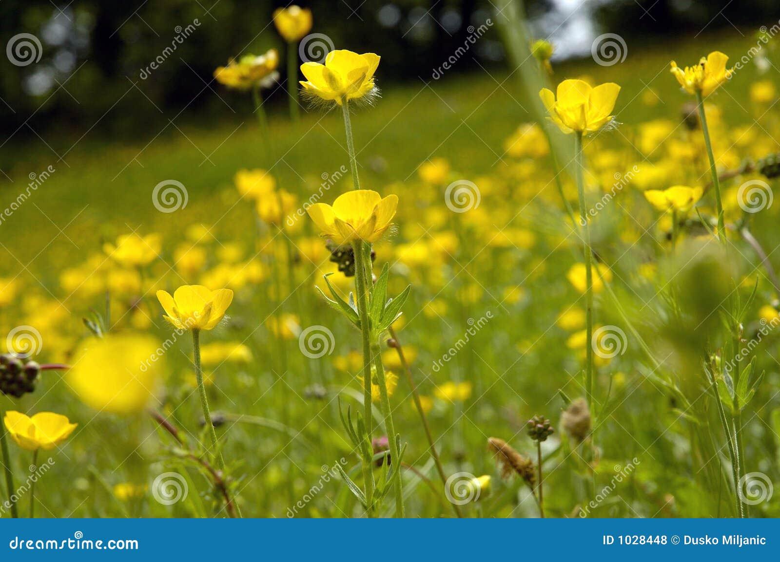 4 λουλούδια