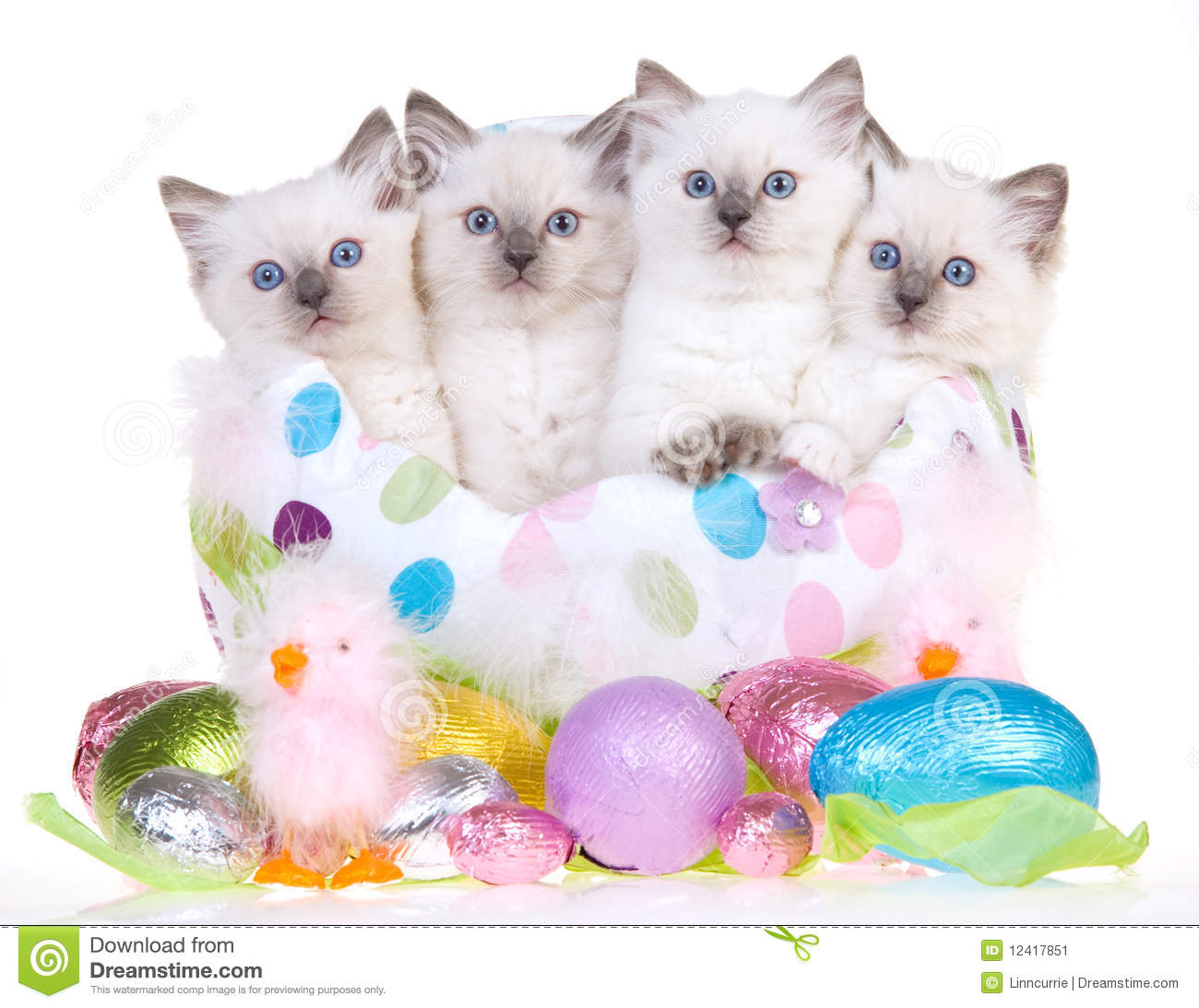 easter backgrounds cat images - photo #22