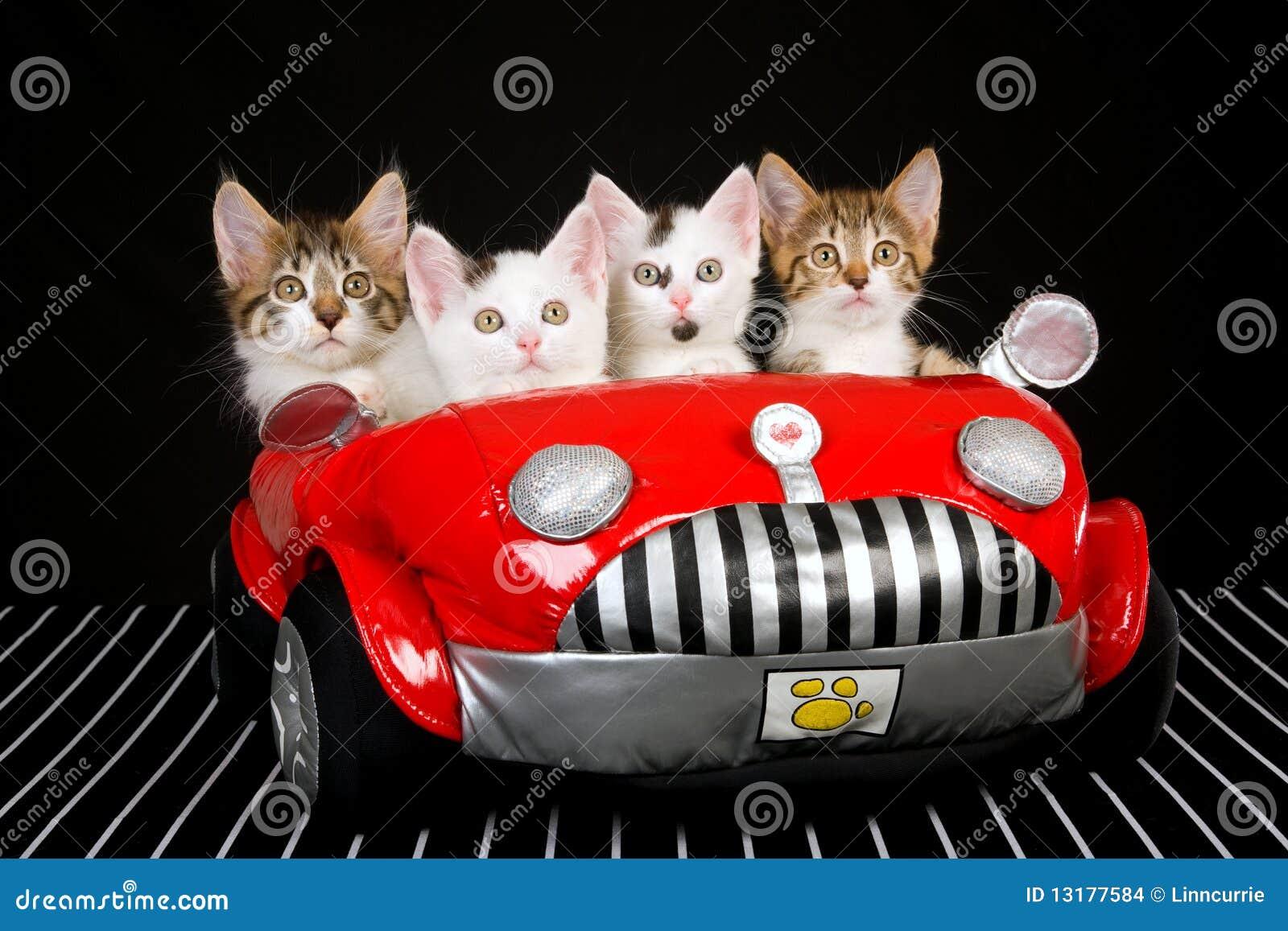 Cat Driving A Car Music Video