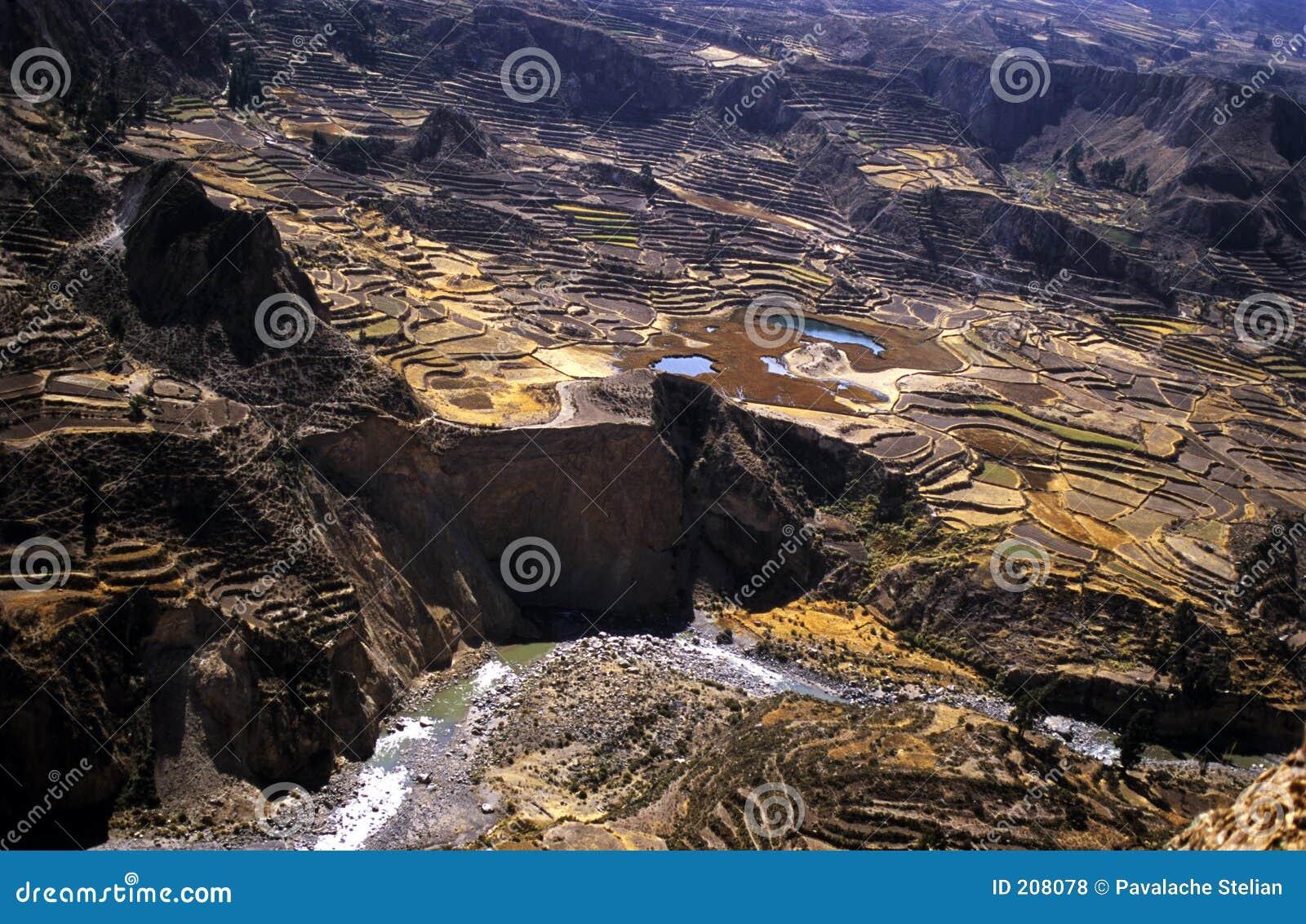 4 kondora colca domów tarasu valey inków