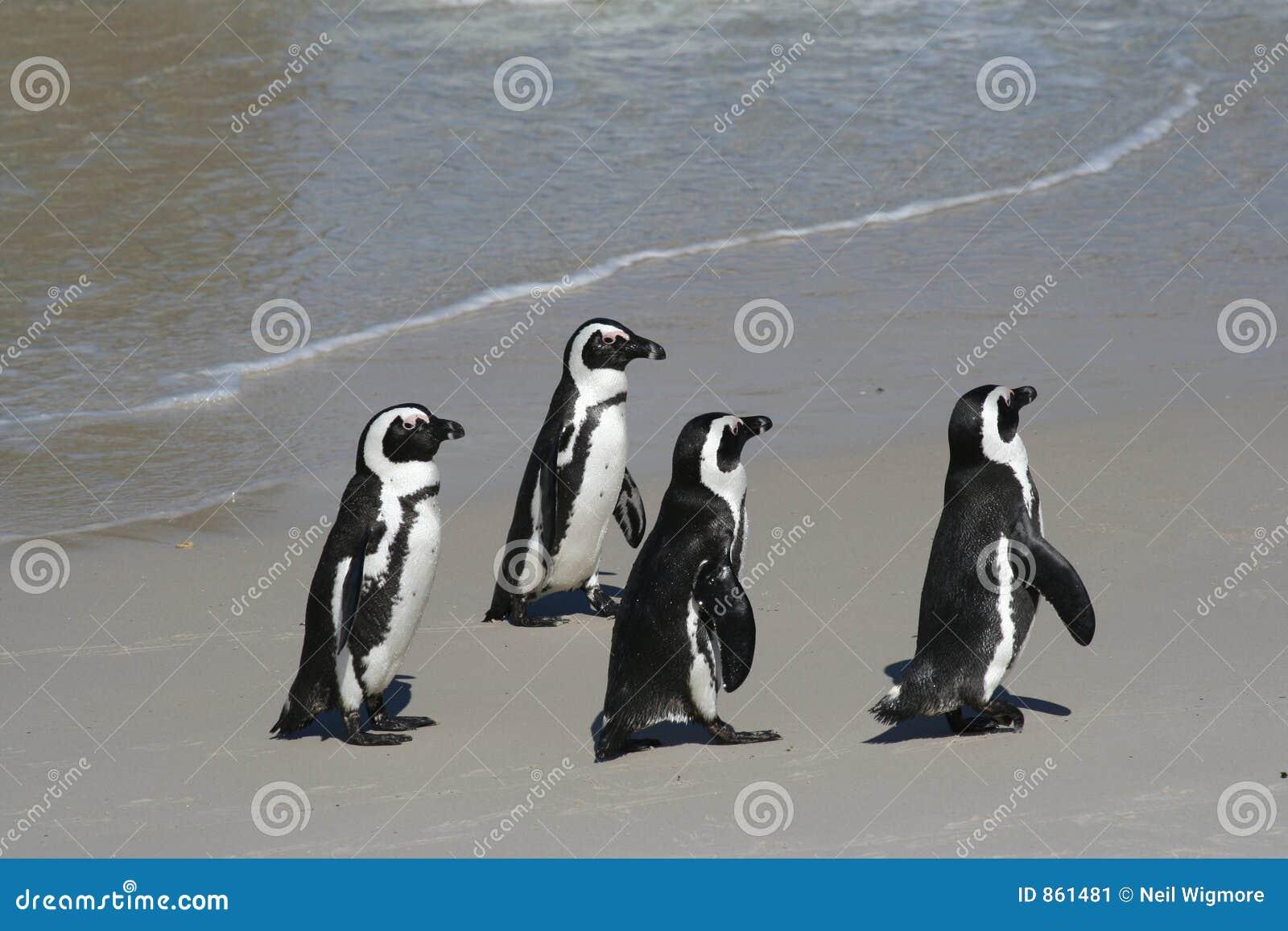 4 pingwina