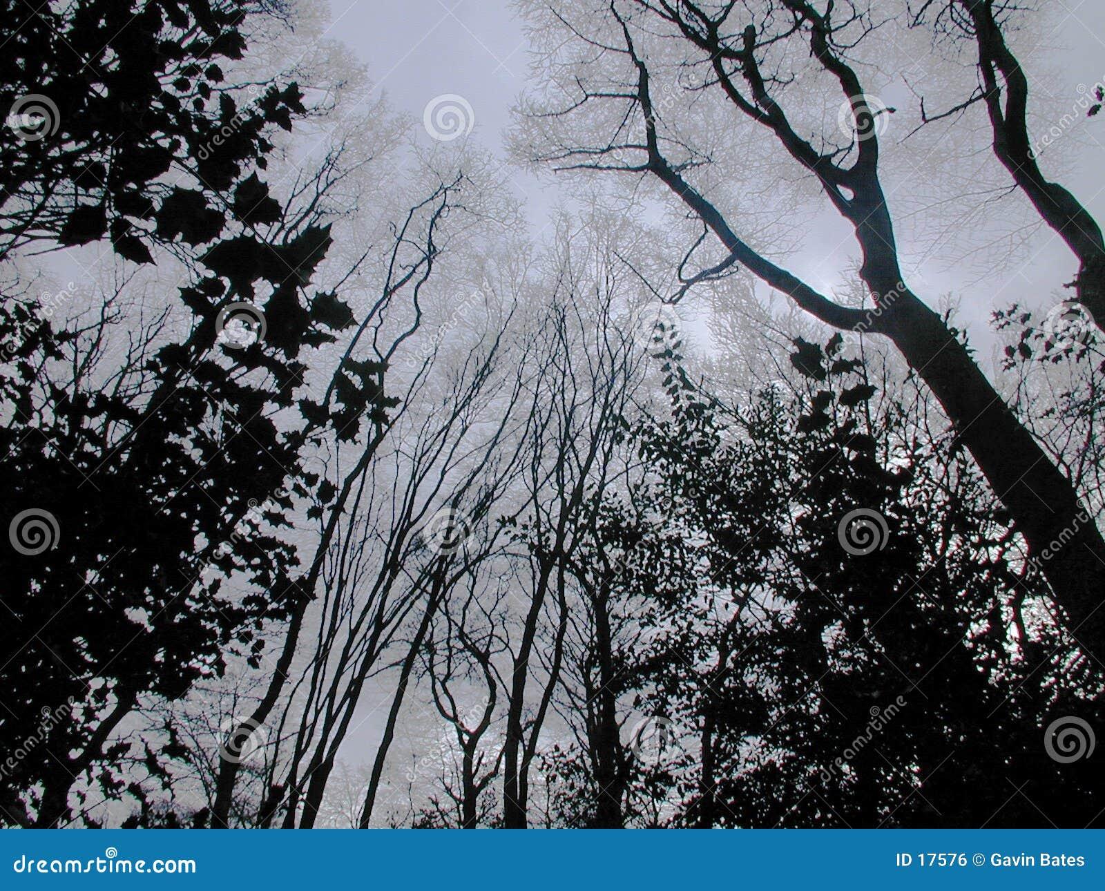免版税库存图片: 黑暗的森林图片