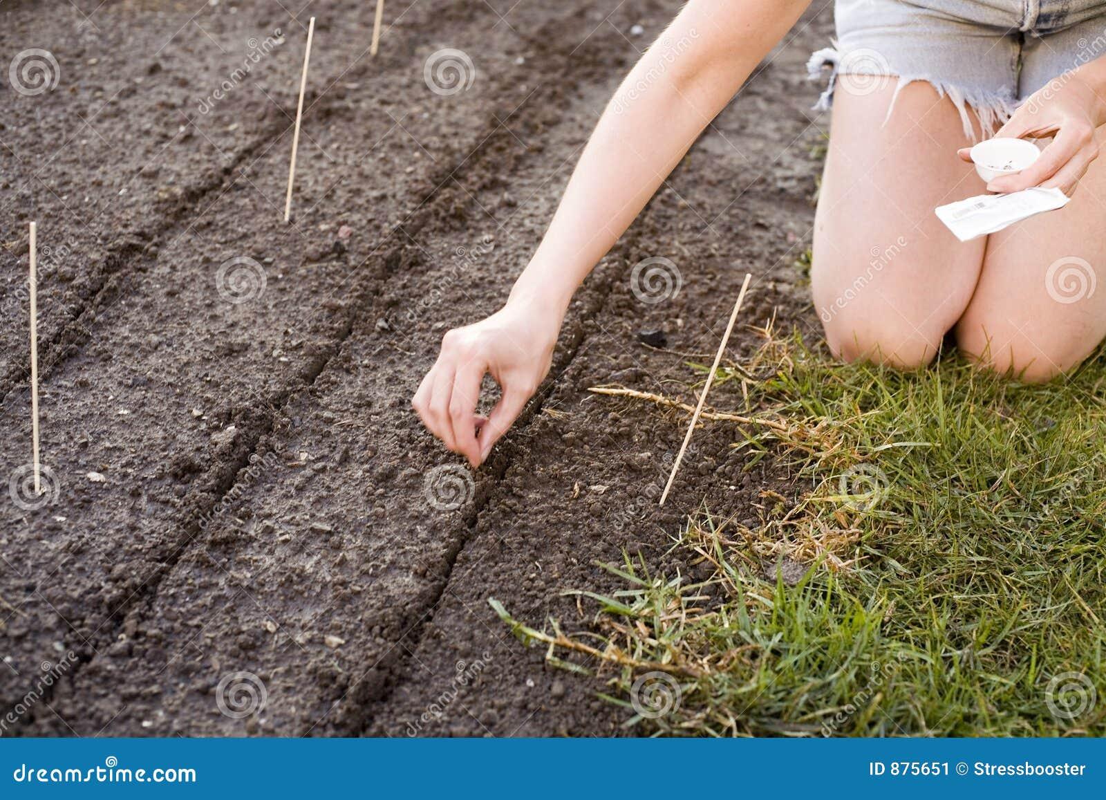 46 podwórków ogrodnictwo