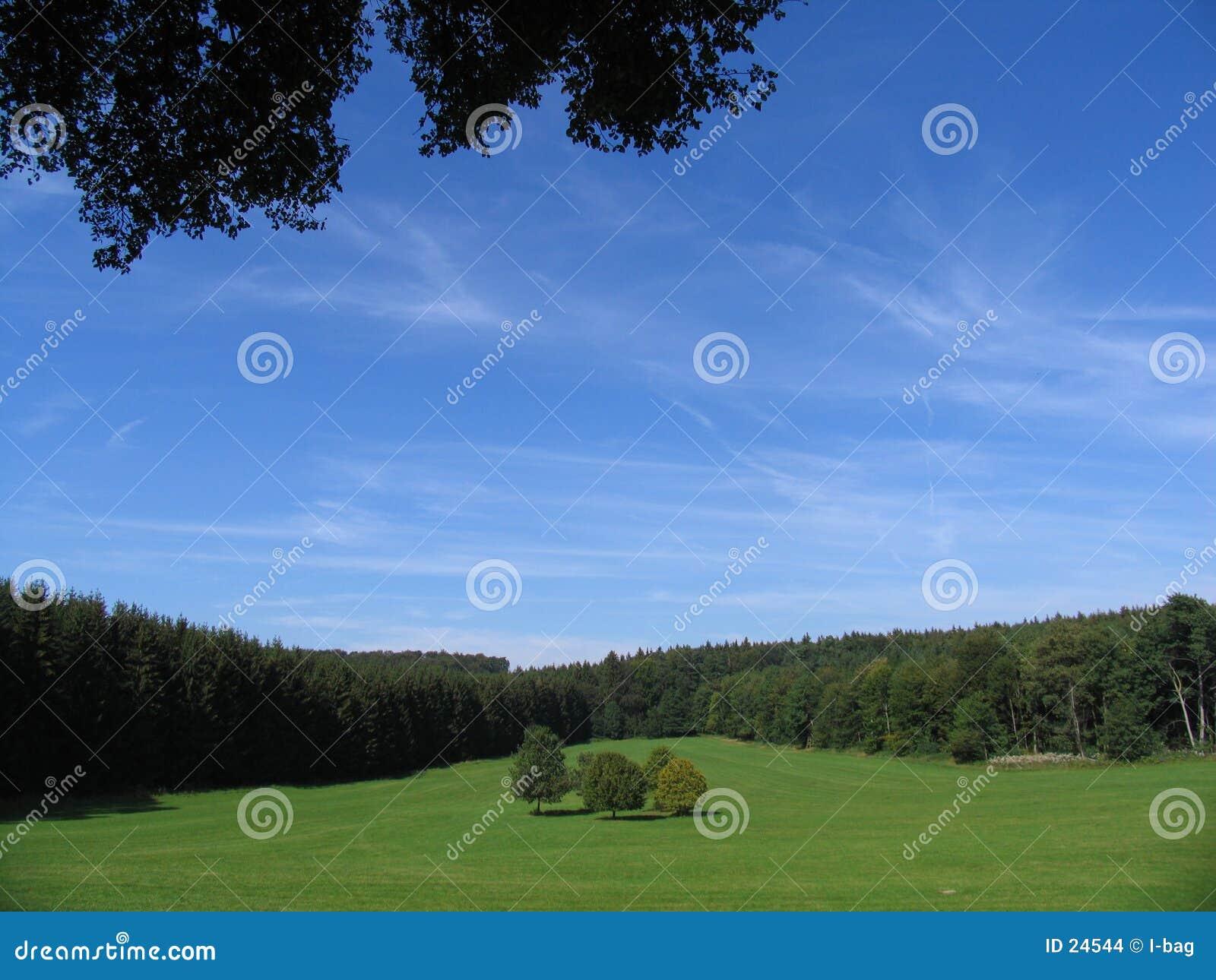 5 árvores cercadas pela floresta