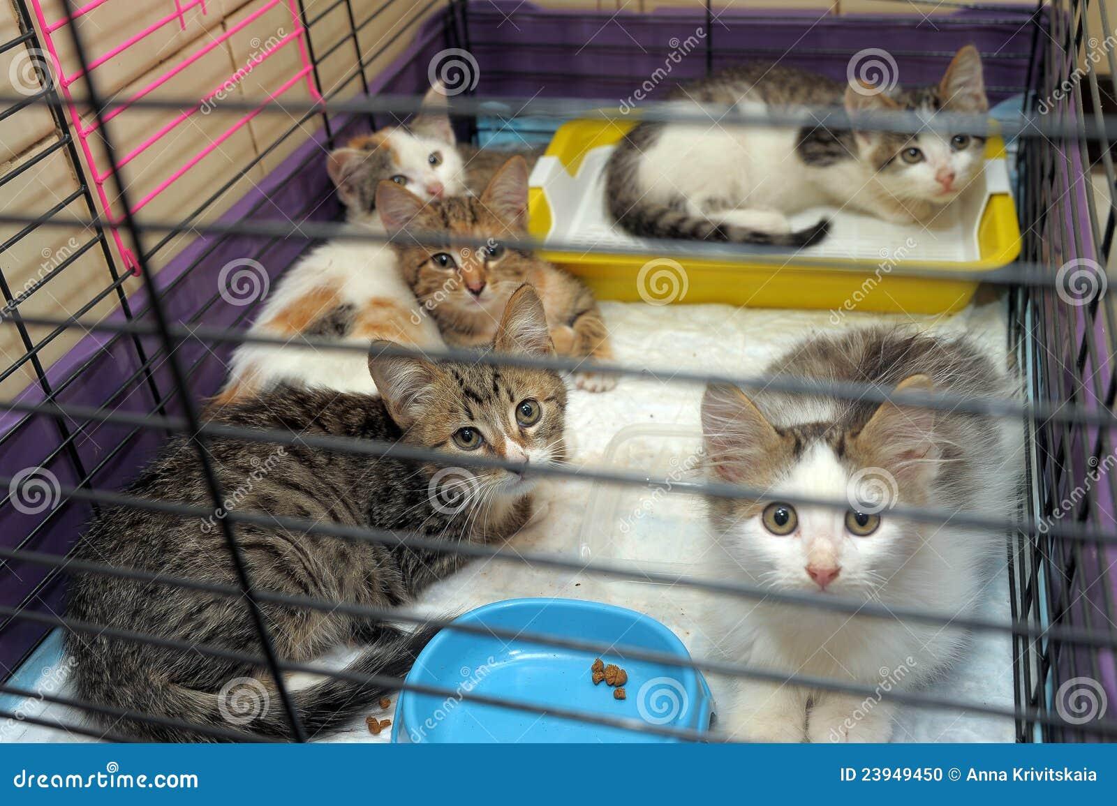 5 котят